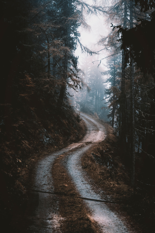 127252 скачать обои Природа, Дорога, Лес, Туман, Деревья, Сосны - заставки и картинки бесплатно