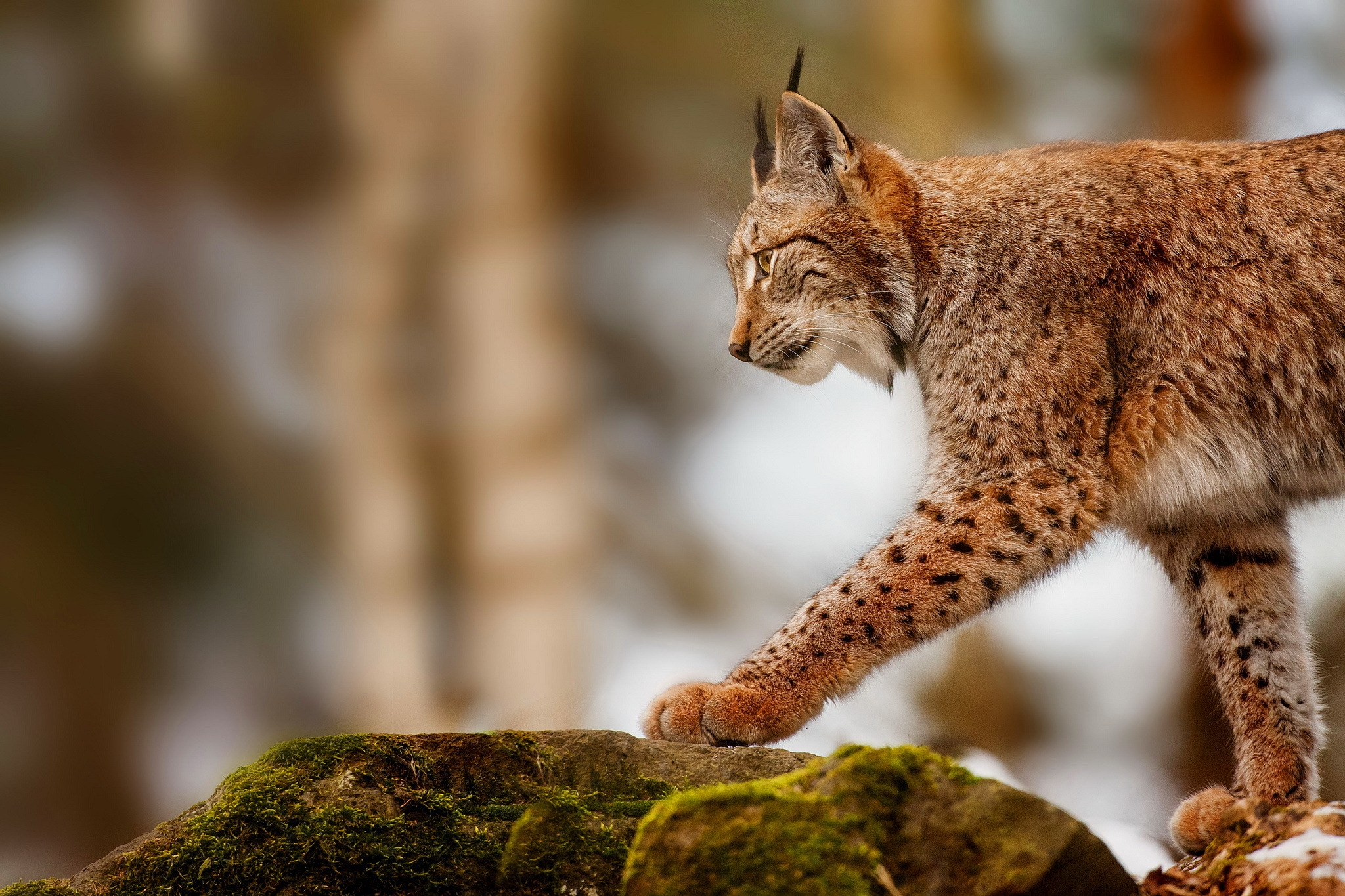 68762 download wallpaper Animals, Iris, Rock, Stone, Stroll screensavers and pictures for free