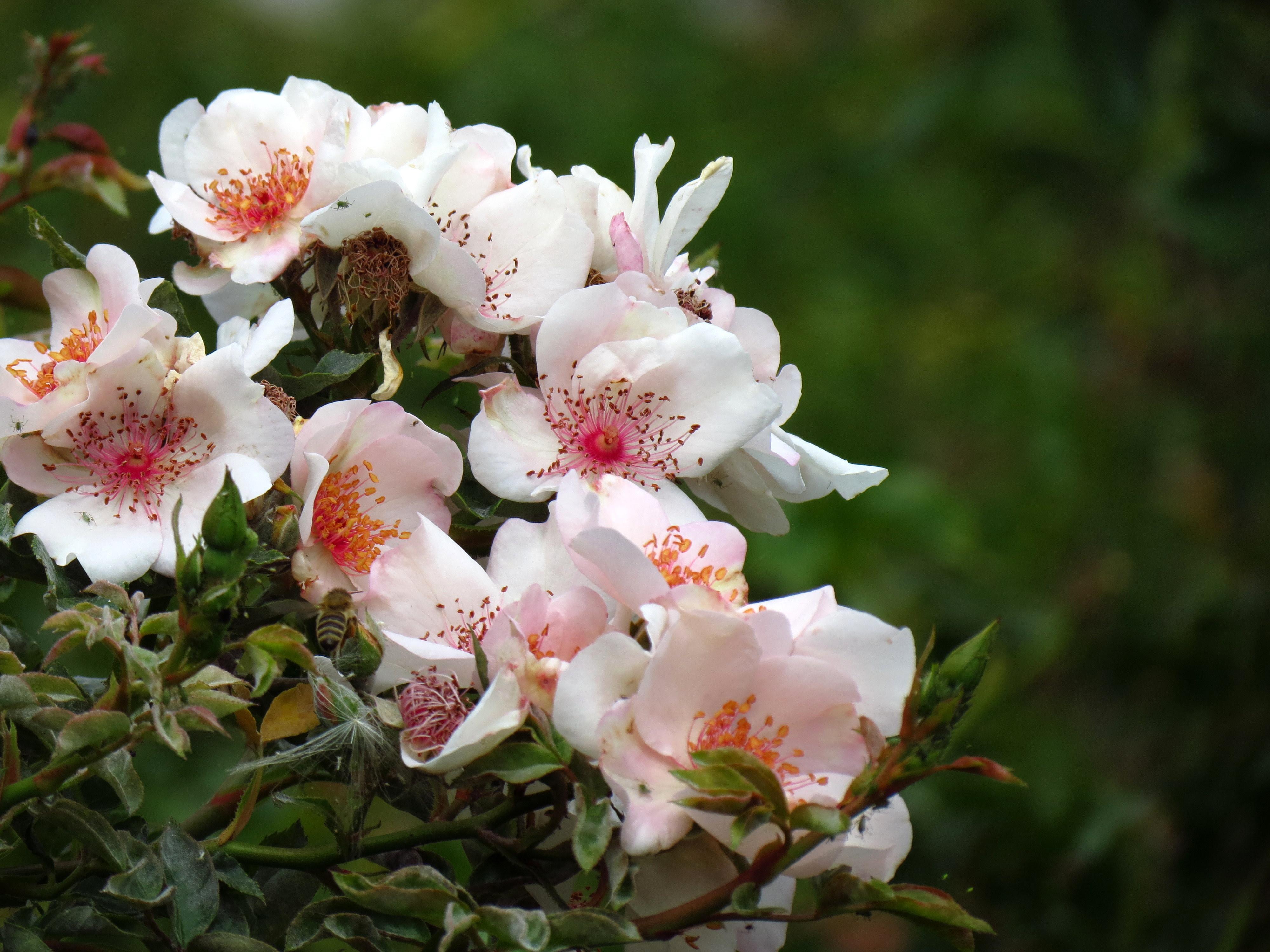 20596 скачать обои Растения, Цветы - заставки и картинки бесплатно