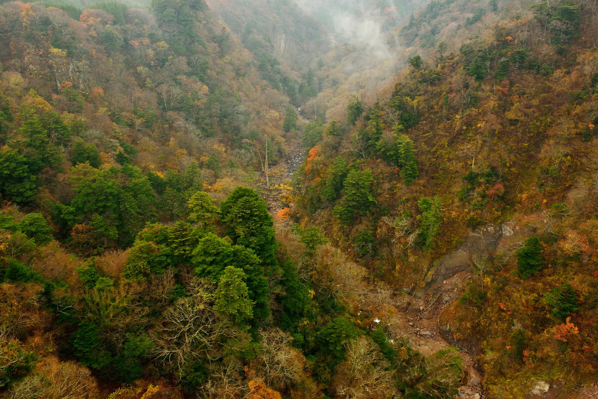 131366 Hintergrundbild 128x160 kostenlos auf deinem Handy, lade Bilder Natur, Bäume, Berg, Wald, Steigung 128x160 auf dein Handy herunter