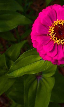14472 скачать обои Растения, Цветы - заставки и картинки бесплатно