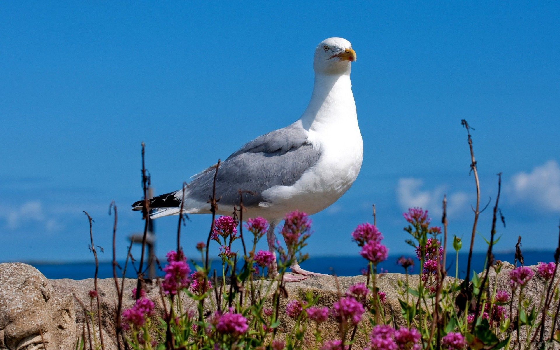 125158 download wallpaper Animals, Gull, Seagull, Bird, Sky, Color, Light Coloured, Light screensavers and pictures for free