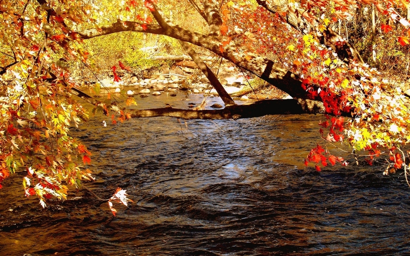27098 download wallpaper Landscape, Rivers, Trees, Autumn screensavers and pictures for free