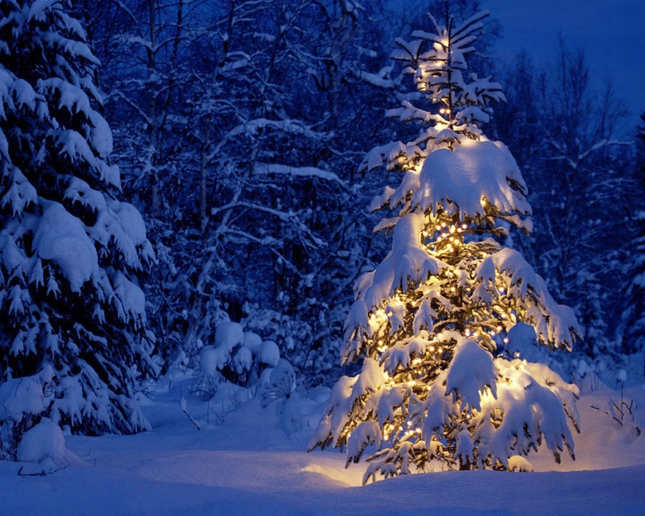 8704 download wallpaper Holidays, Landscape, Winter, Trees, New Year, Snow, Fir-Trees, Christmas, Xmas screensavers and pictures for free