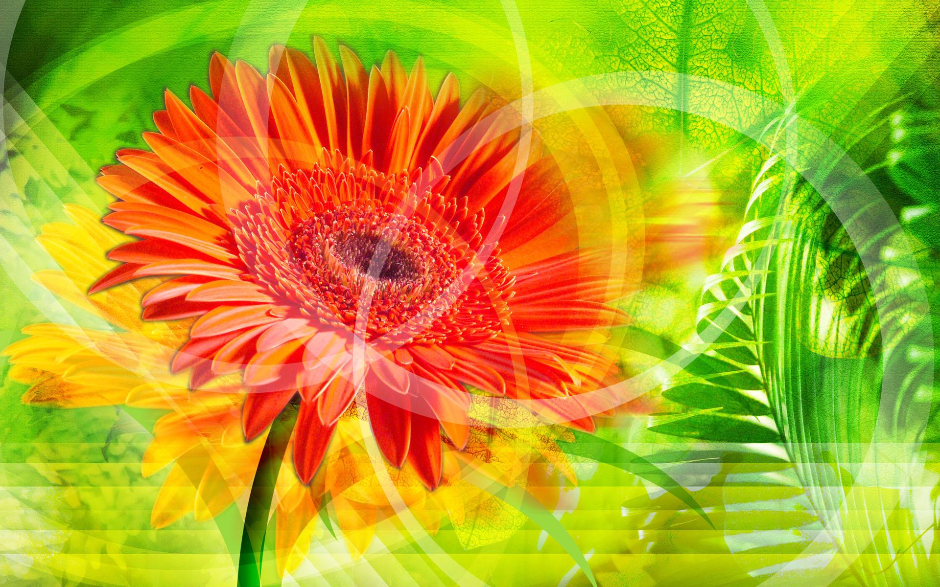 15568 descargar fondo de pantalla Plantas, Flores: protectores de pantalla e imágenes gratis