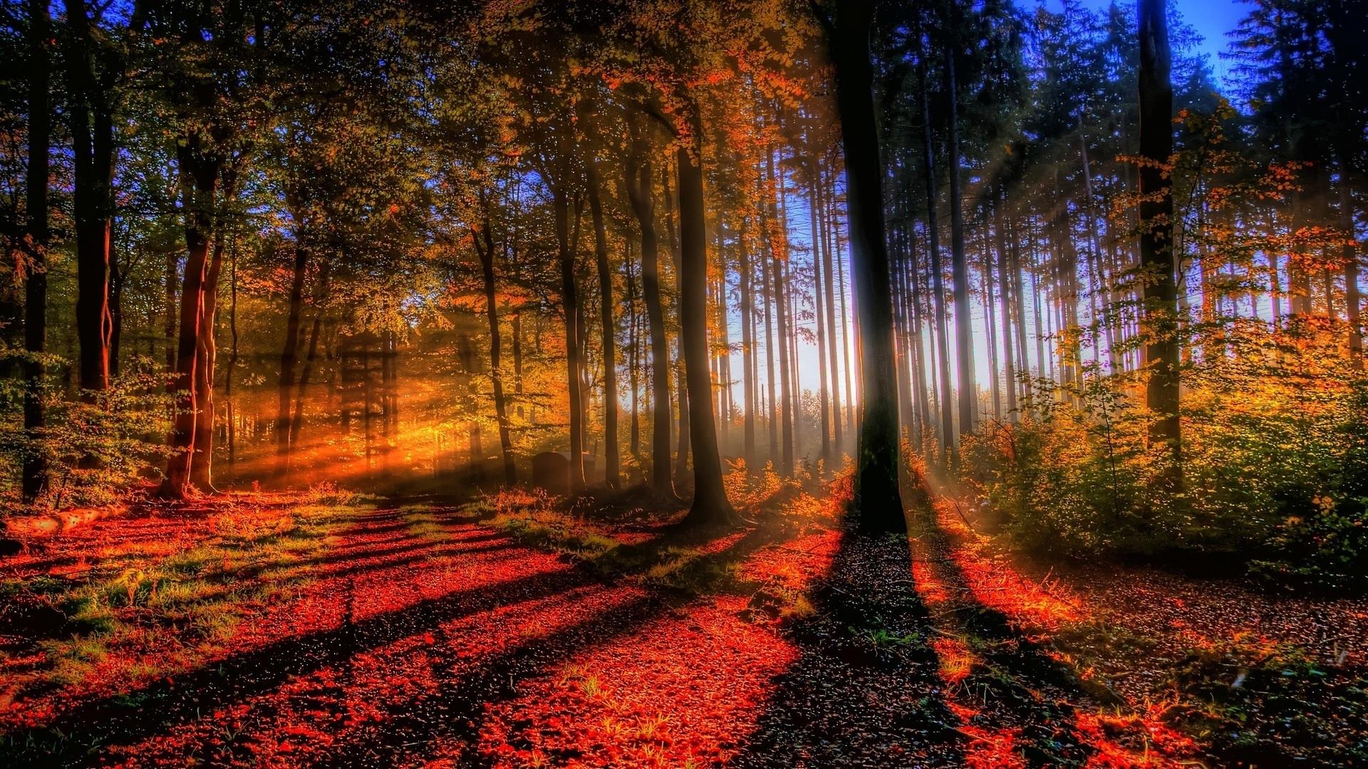 25969 скачать обои Пейзаж, Деревья, Солнце - заставки и картинки бесплатно