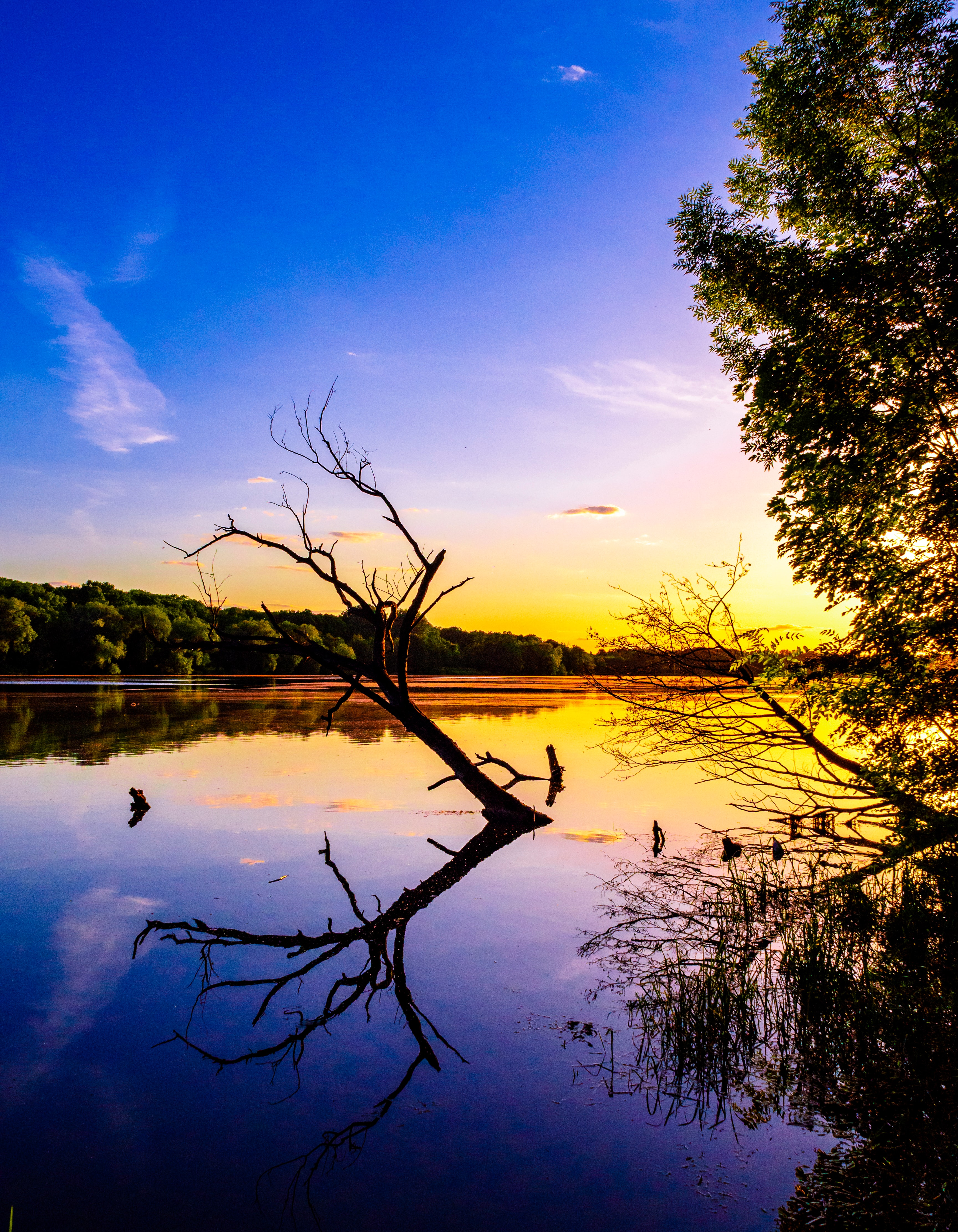 136856 download wallpaper Nature, Branch, Lake, Reflection, Dusk, Twilight screensavers and pictures for free