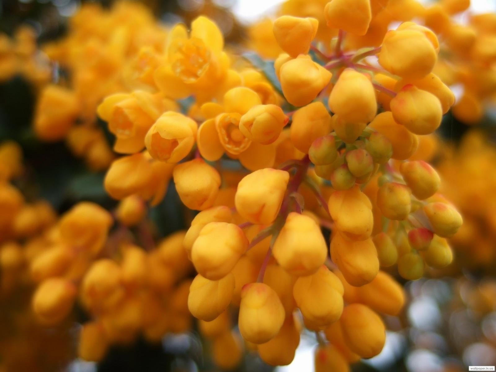 7051 скачать обои Растения, Цветы - заставки и картинки бесплатно
