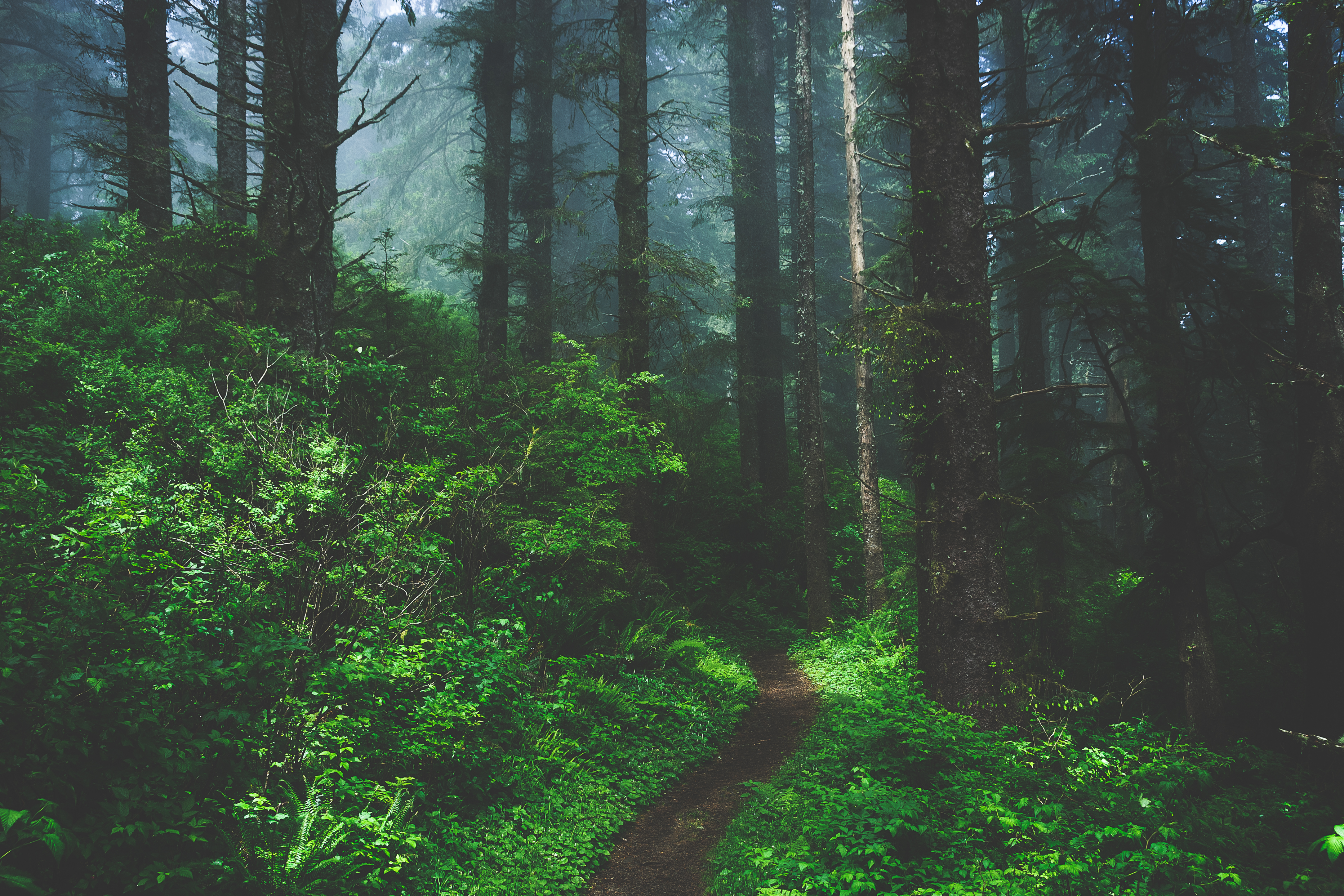 128074 download wallpaper Forest, Nature, Trees, Grass, Fog, Path screensavers and pictures for free