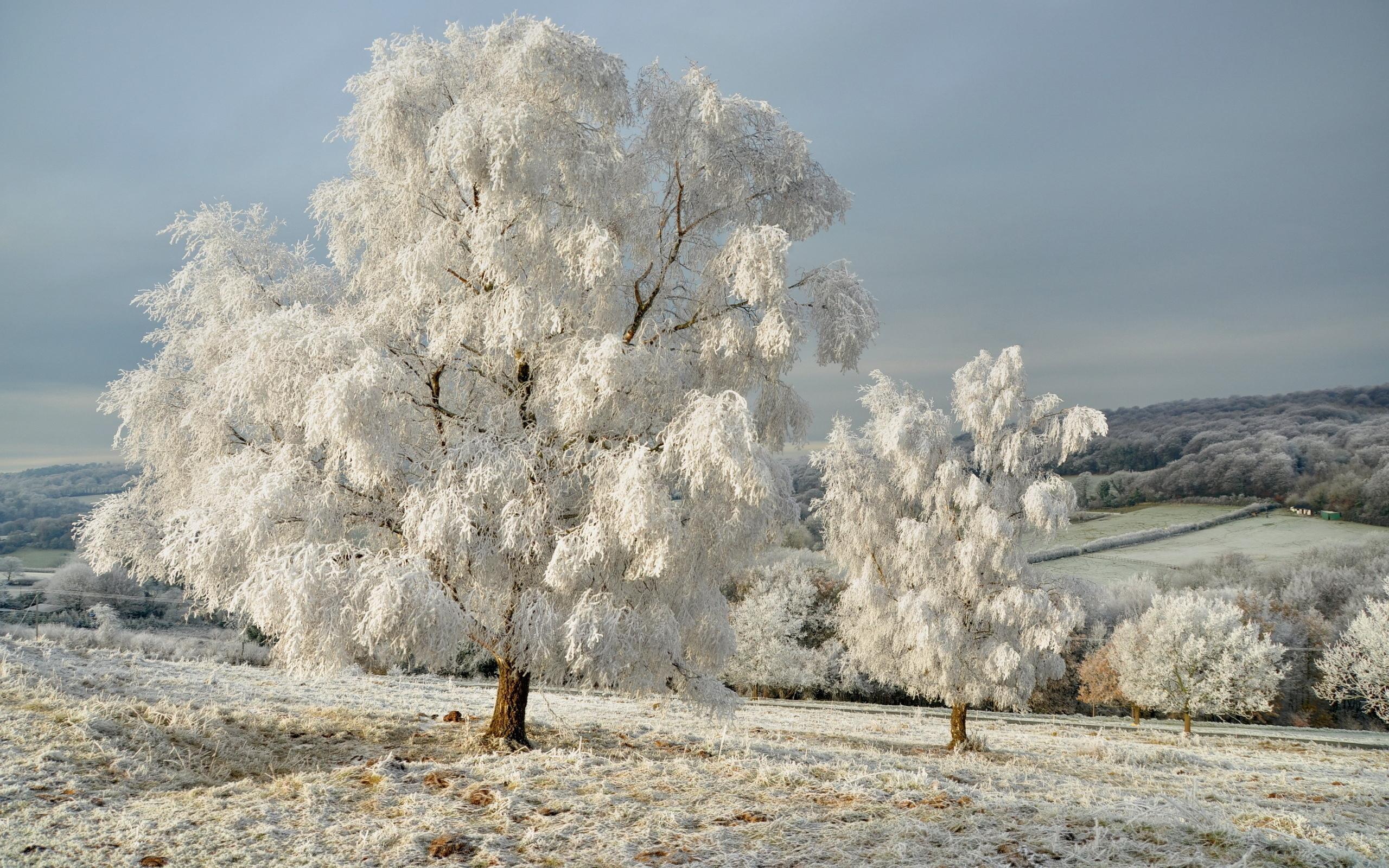 25936 скачать обои Пейзаж, Зима, Деревья, Поля, Снег - заставки и картинки бесплатно