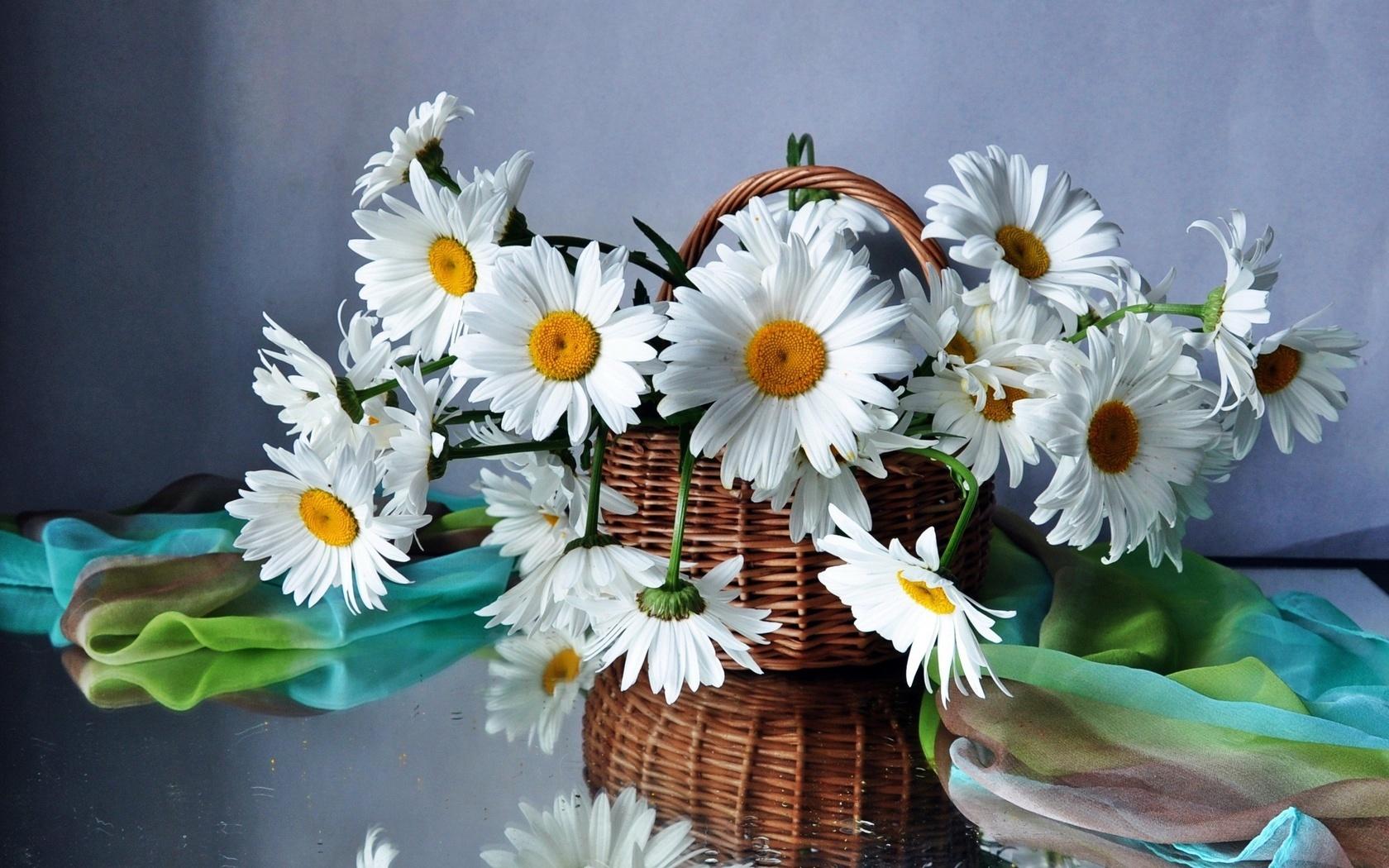 29309 télécharger le fond d'écran Plantes, Fleurs, Camomille, Bouquets - économiseurs d'écran et images gratuitement