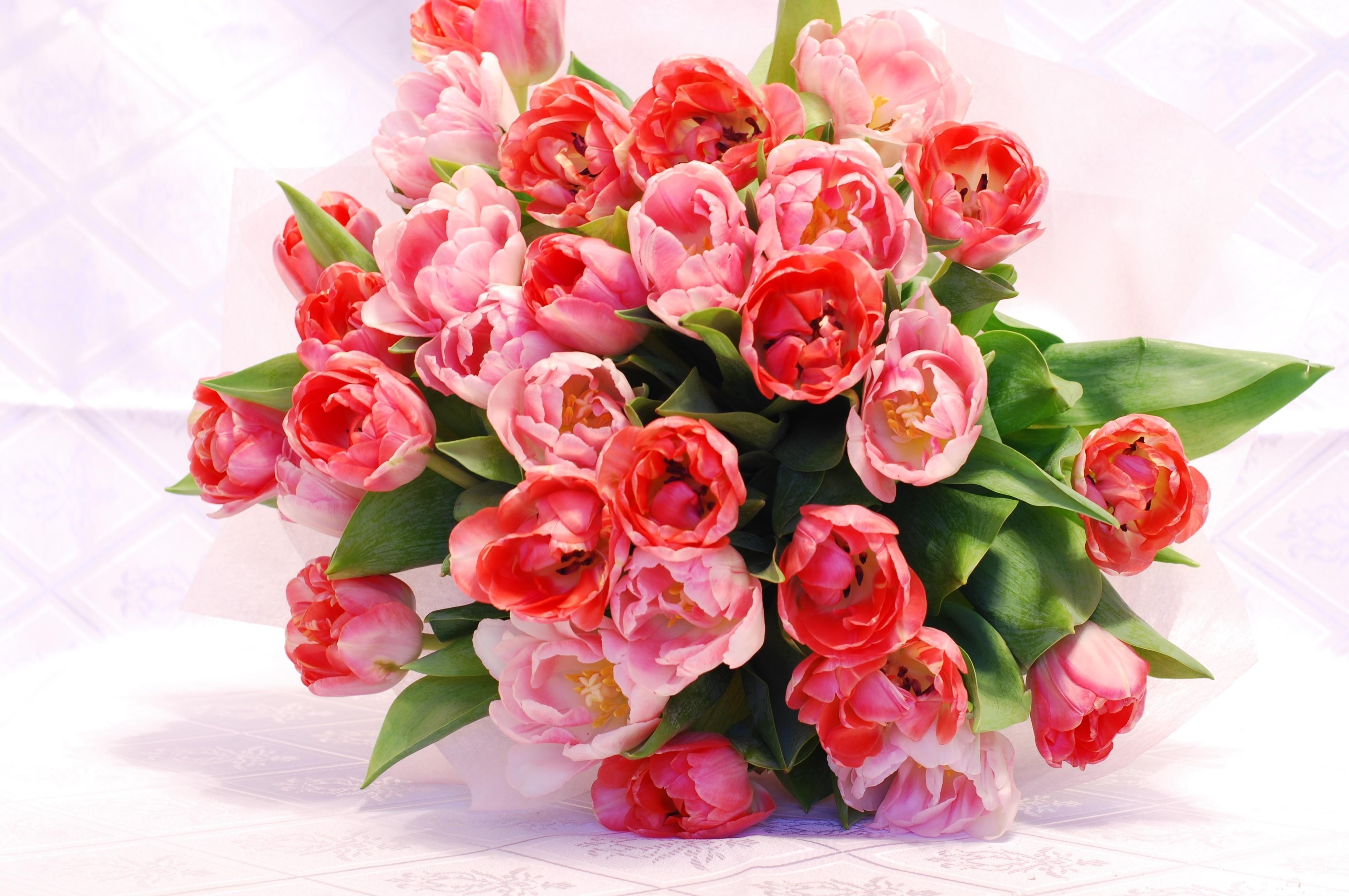 61869 descargar fondo de pantalla Flores, Ramo, Disuelto, Suelto, Generosamente, Es Hermoso, Sensibilidad, Ternura, Tulipanes: protectores de pantalla e imágenes gratis