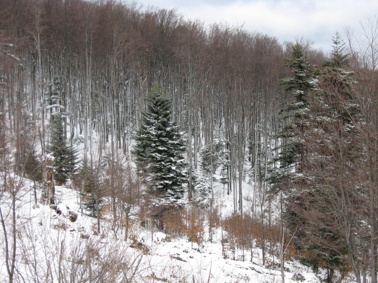 8520 скачать обои Пейзаж, Зима, Деревья, Елки - заставки и картинки бесплатно
