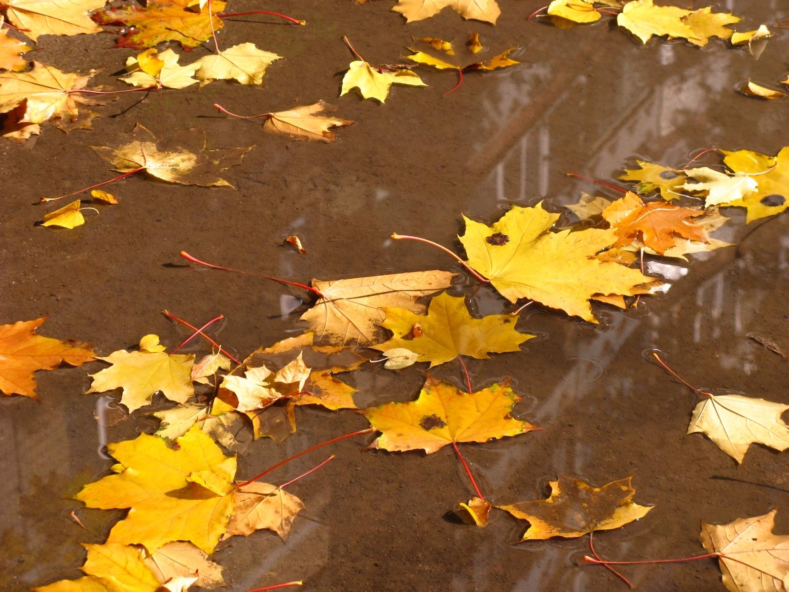 6986 скачать обои Фон, Осень, Листья - заставки и картинки бесплатно