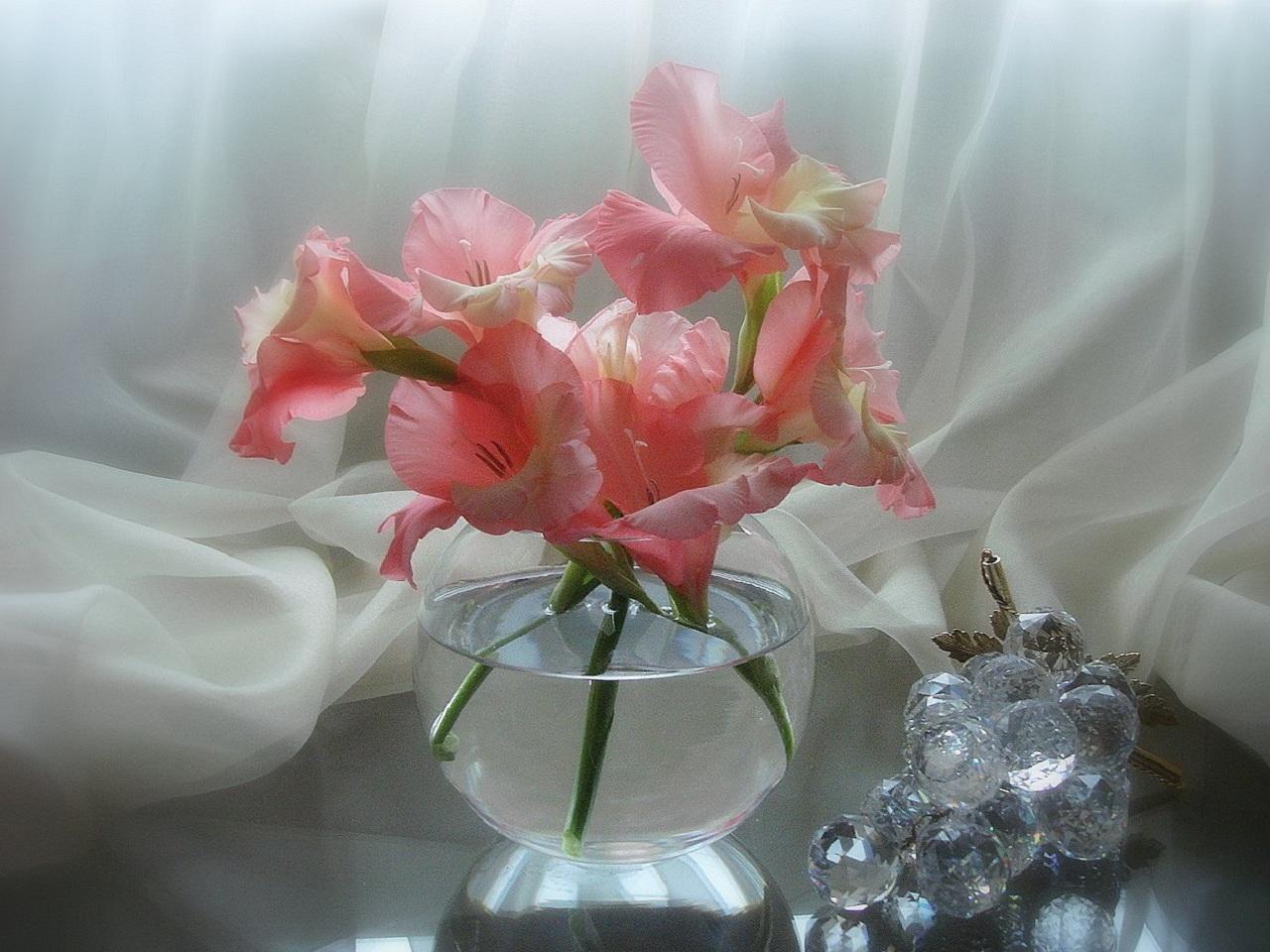 32628 скачать обои Растения, Цветы, Букеты - заставки и картинки бесплатно