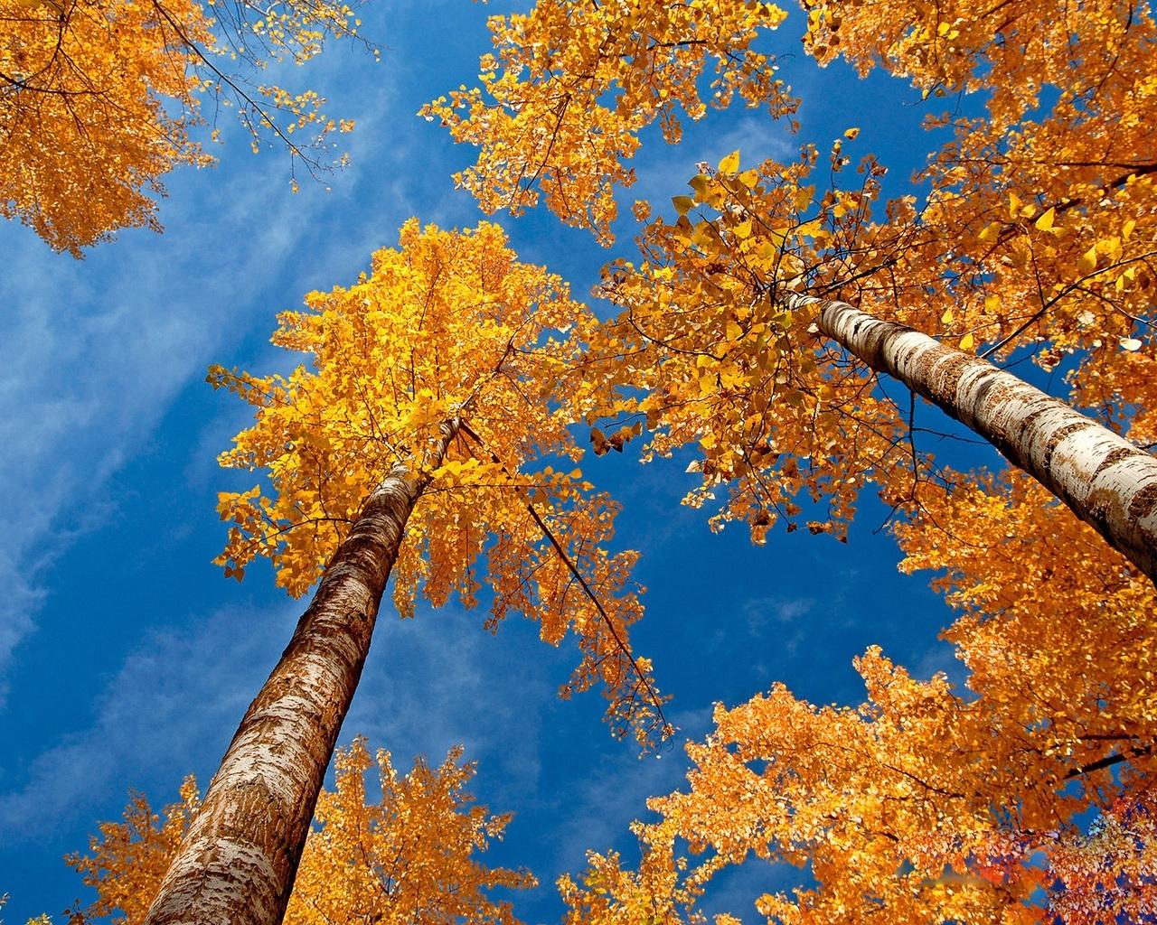 4508 скачать обои Пейзаж, Деревья, Осень - заставки и картинки бесплатно