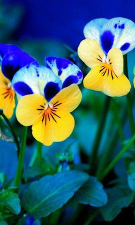 644 Заставки и Обои Растения на телефон. Скачать Растения, Цветы, Анютины Глазки картинки бесплатно