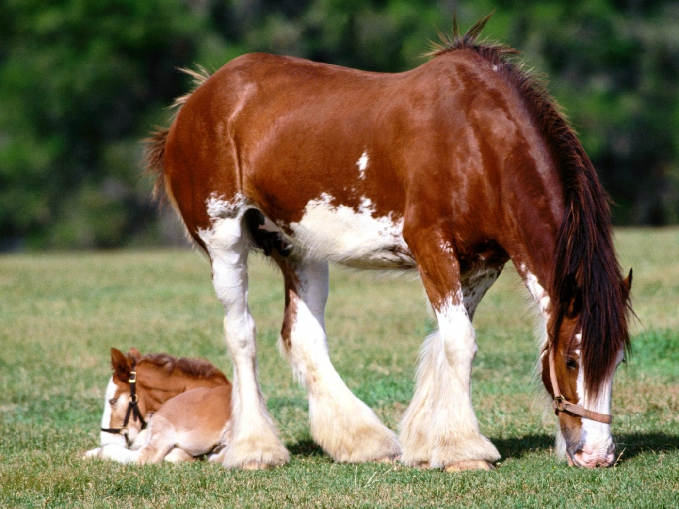 44810 download wallpaper Animals, Horses screensavers and pictures for free