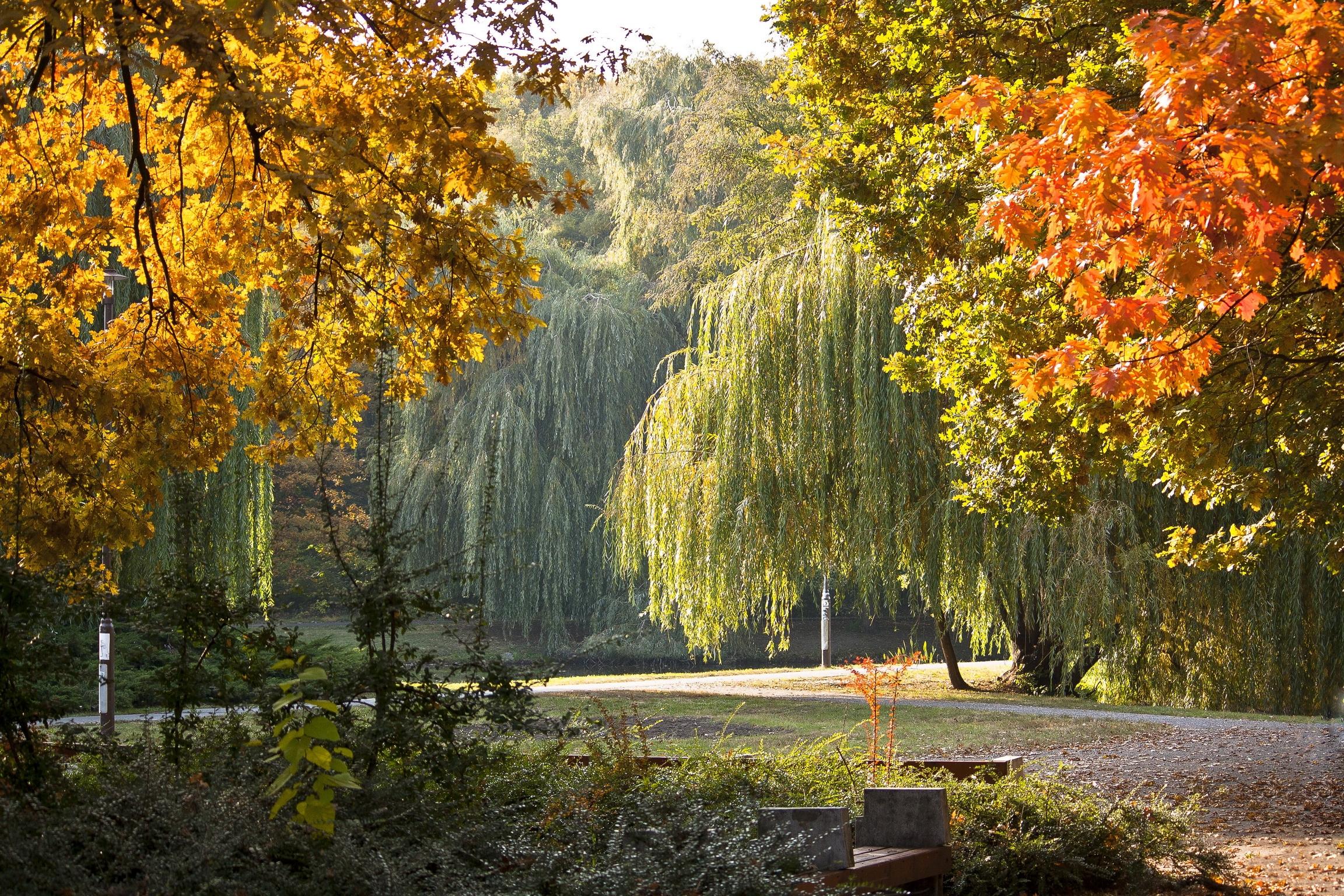 99105壁紙のダウンロード自然, 公園, ハンガリー, 秋, 風景-スクリーンセーバーと写真を無料で