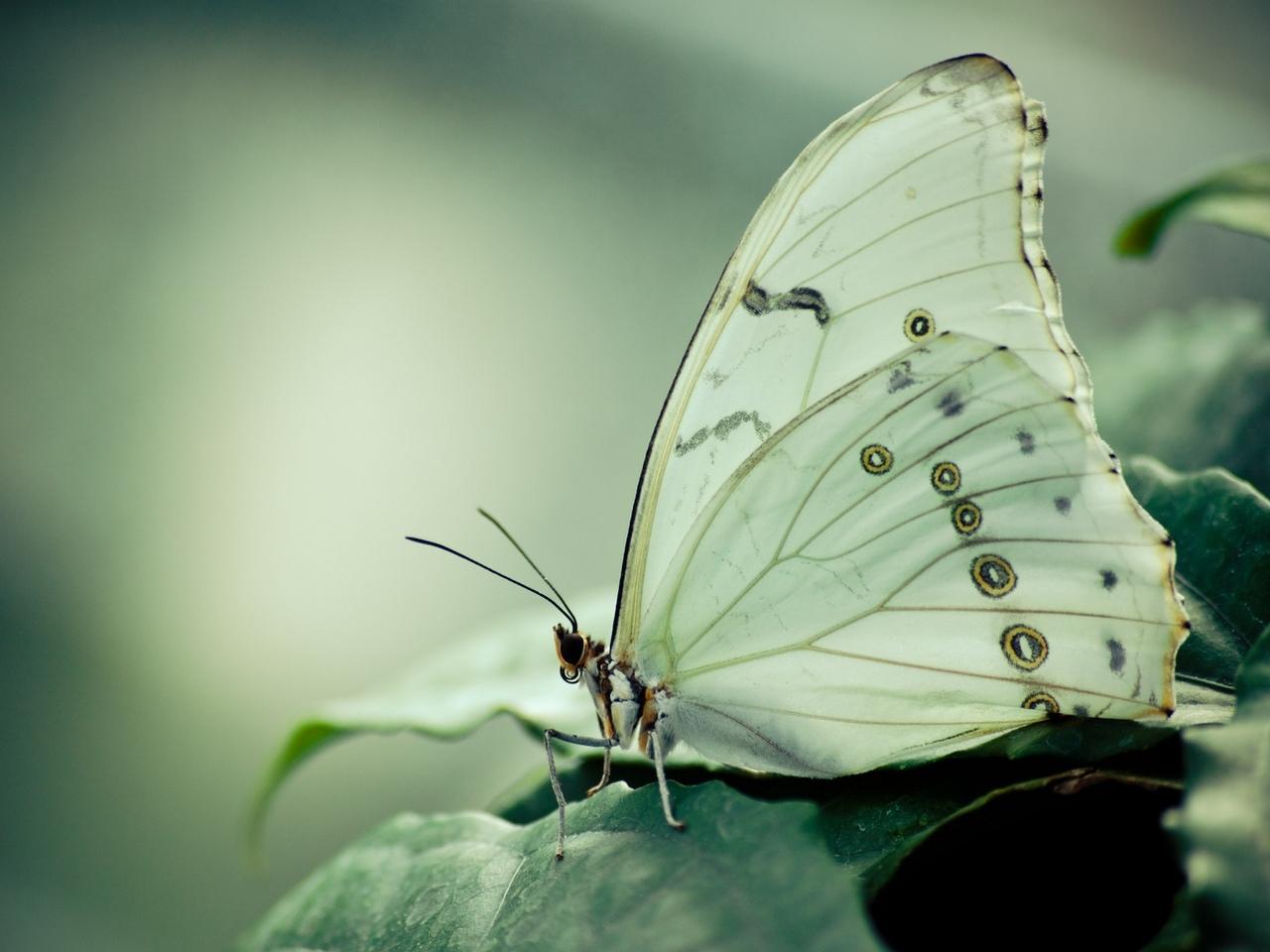 38919 Salvapantallas y fondos de pantalla Insectos en tu teléfono. Descarga imágenes de Mariposas, Insectos gratis