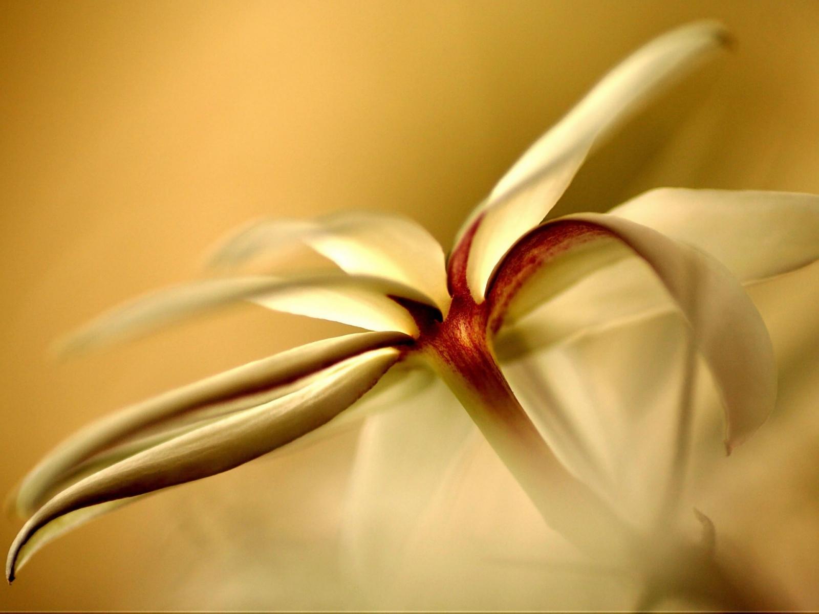 6783 скачать обои Растения, Цветы - заставки и картинки бесплатно