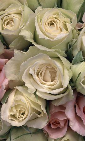 4532 скачать обои Растения, Цветы, Розы - заставки и картинки бесплатно
