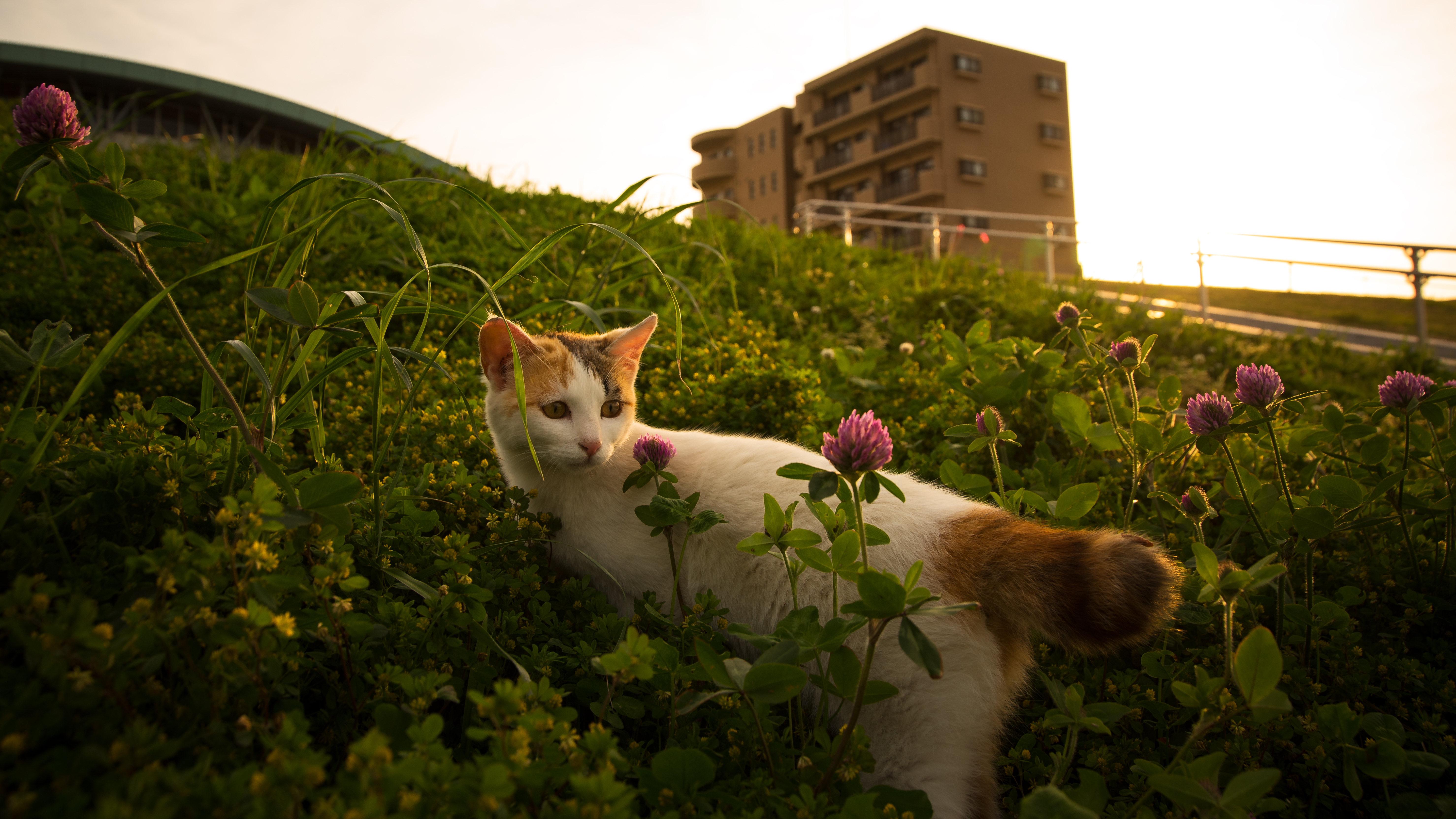 51027 download wallpaper Animals, Cat, Grass, Pet, Flowers screensavers and pictures for free