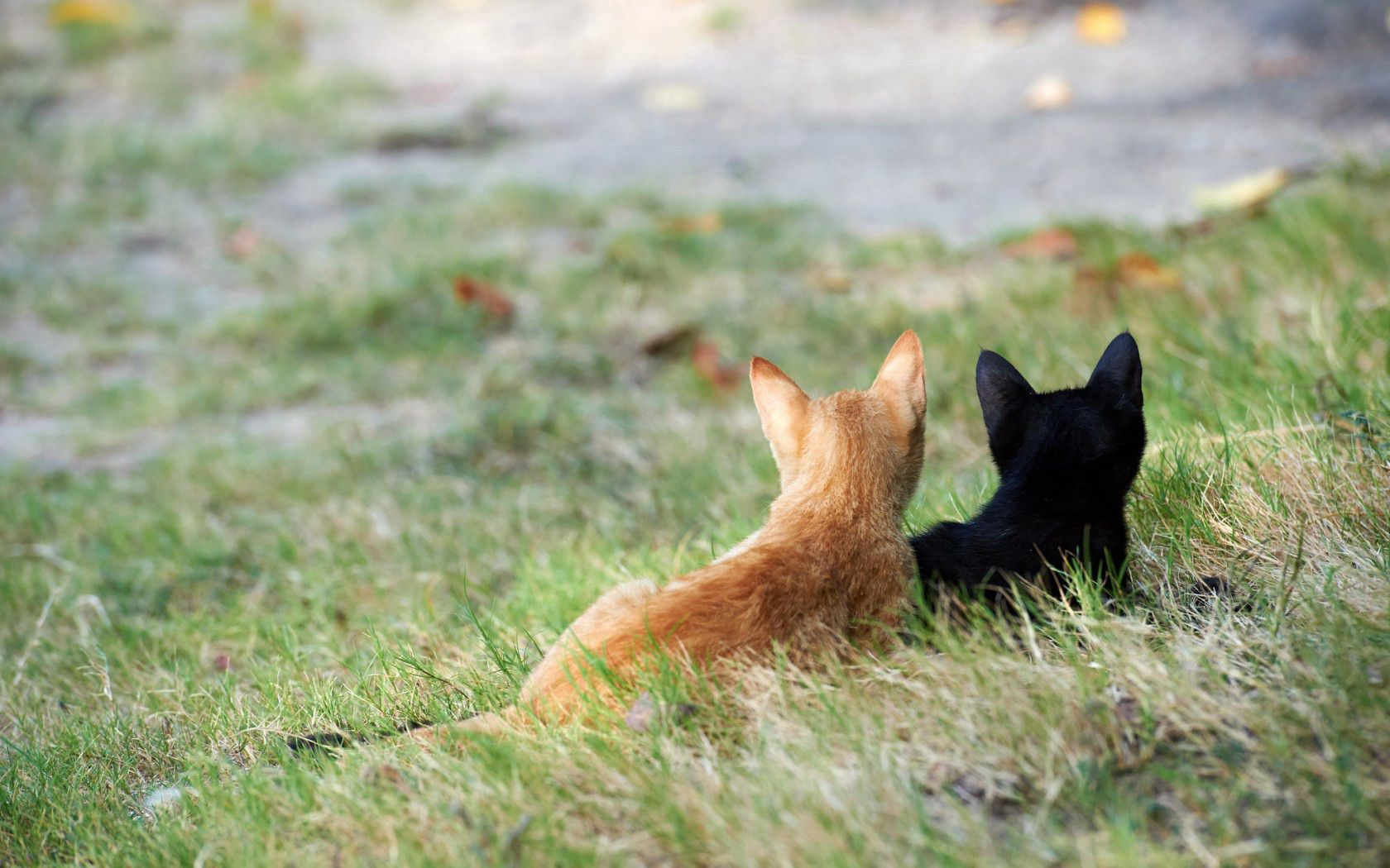 131096 Hintergrundbild 128x160 kostenlos auf deinem Handy, lade Bilder Tiere, Grass, Kätzchen, Paar, Das Schwarze, Rothaarige 128x160 auf dein Handy herunter
