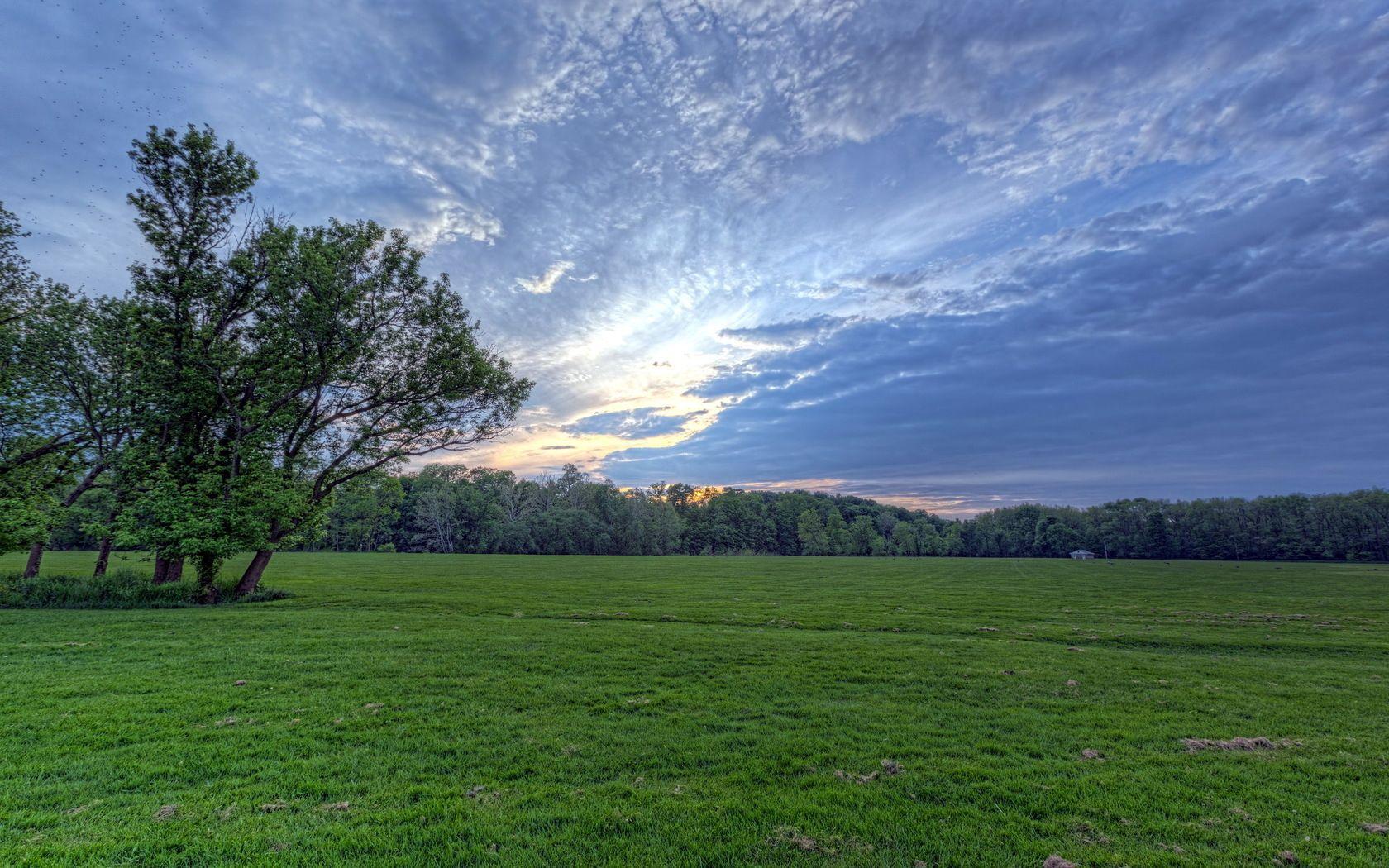 58276 скачать обои Зелень, Природа, Трава, Небо, Облака, Дерево, Поле, Вечер, Луг, Воздушные - заставки и картинки бесплатно