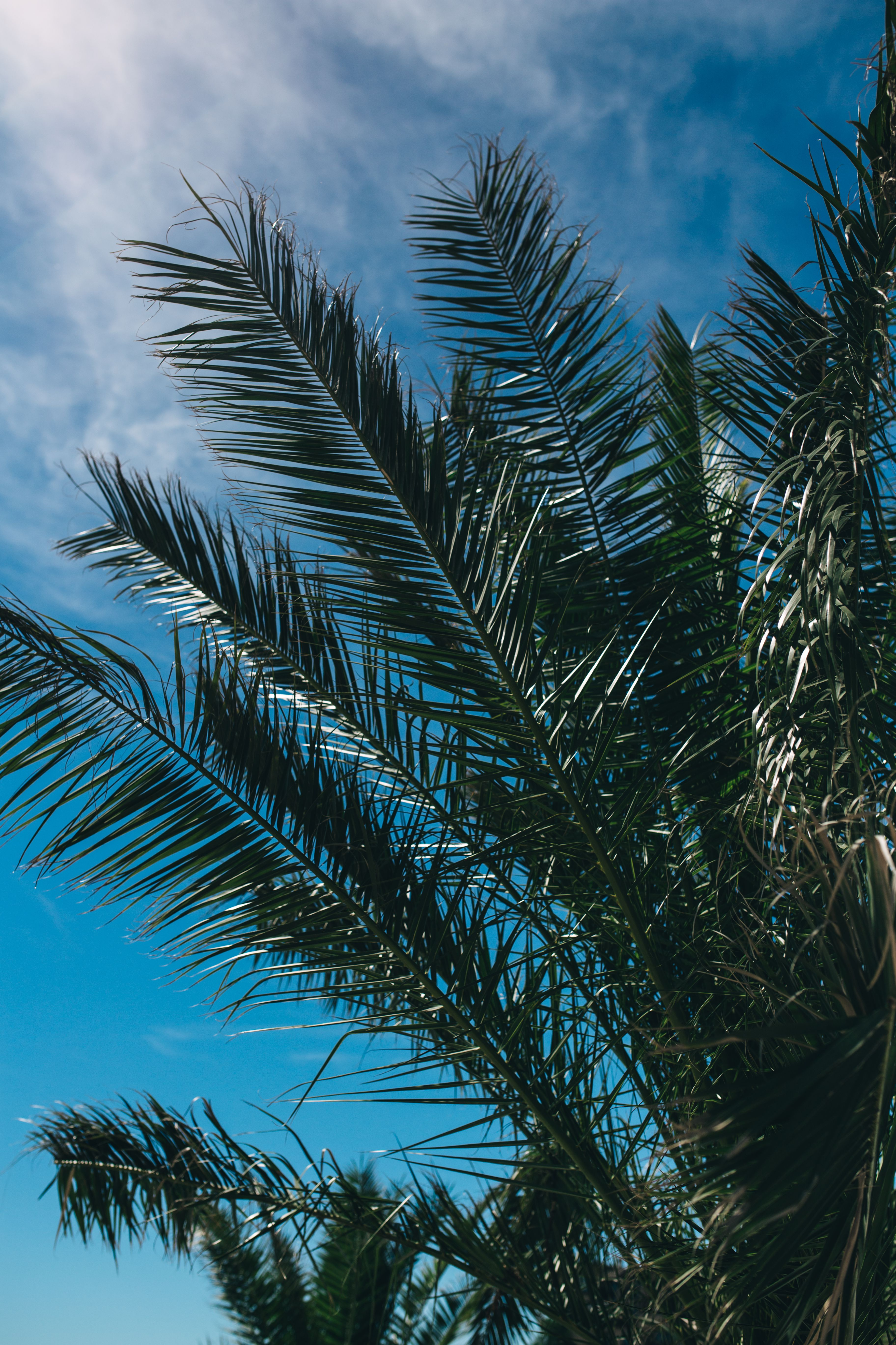152016 download wallpaper Nature, Palm, Branches, Leaves, Sky screensavers and pictures for free