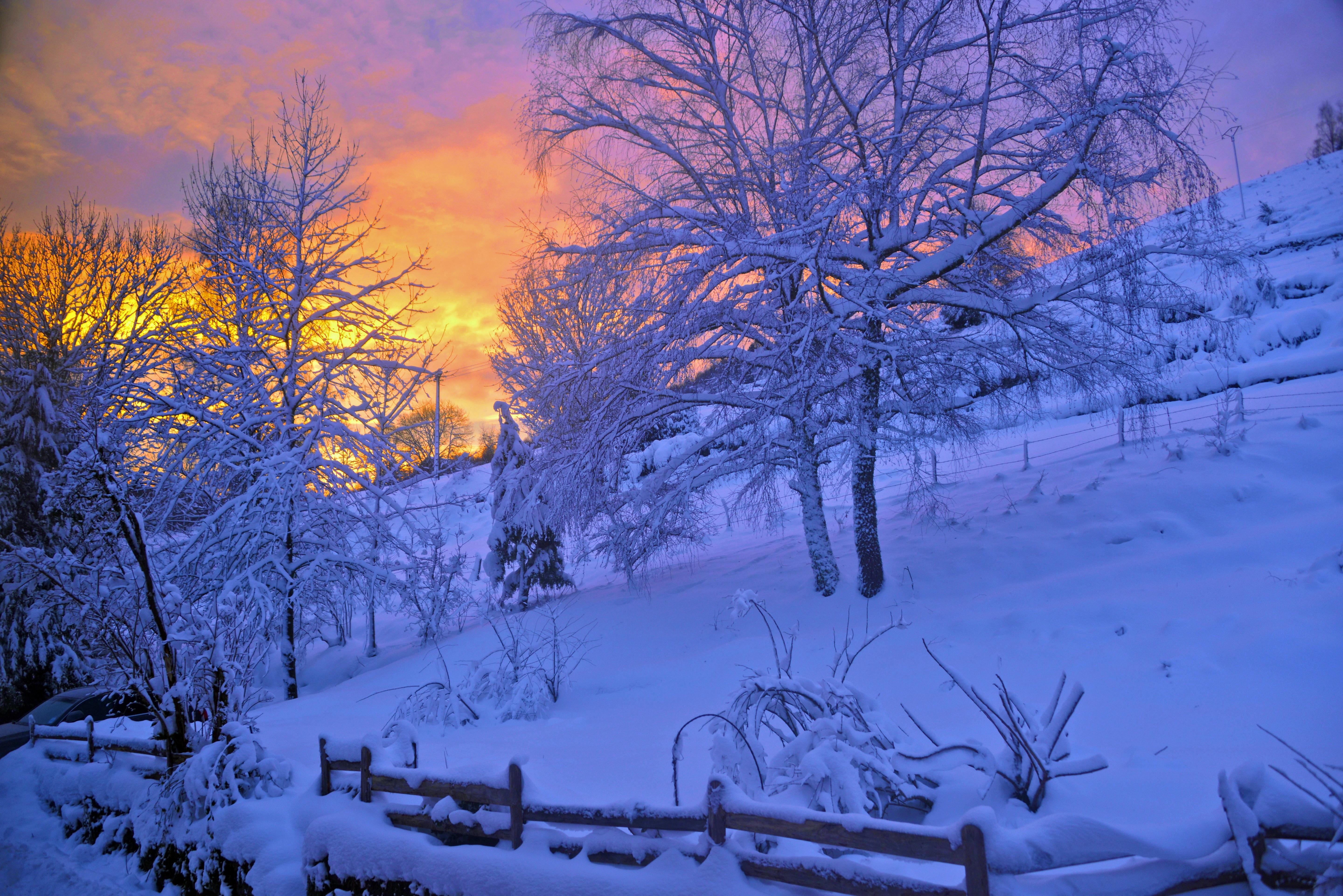 158009 скачать обои Зима, Природа, Деревья, Закат, Небо, Снег, Забор - заставки и картинки бесплатно