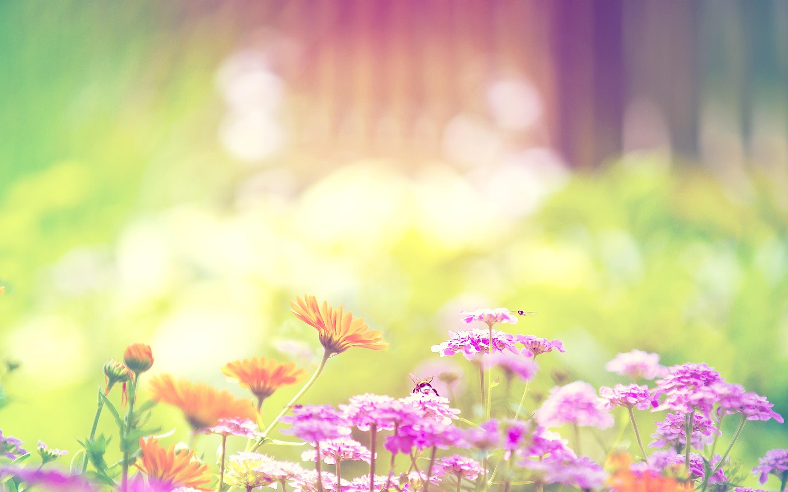 17634 скачать обои Растения, Цветы - заставки и картинки бесплатно