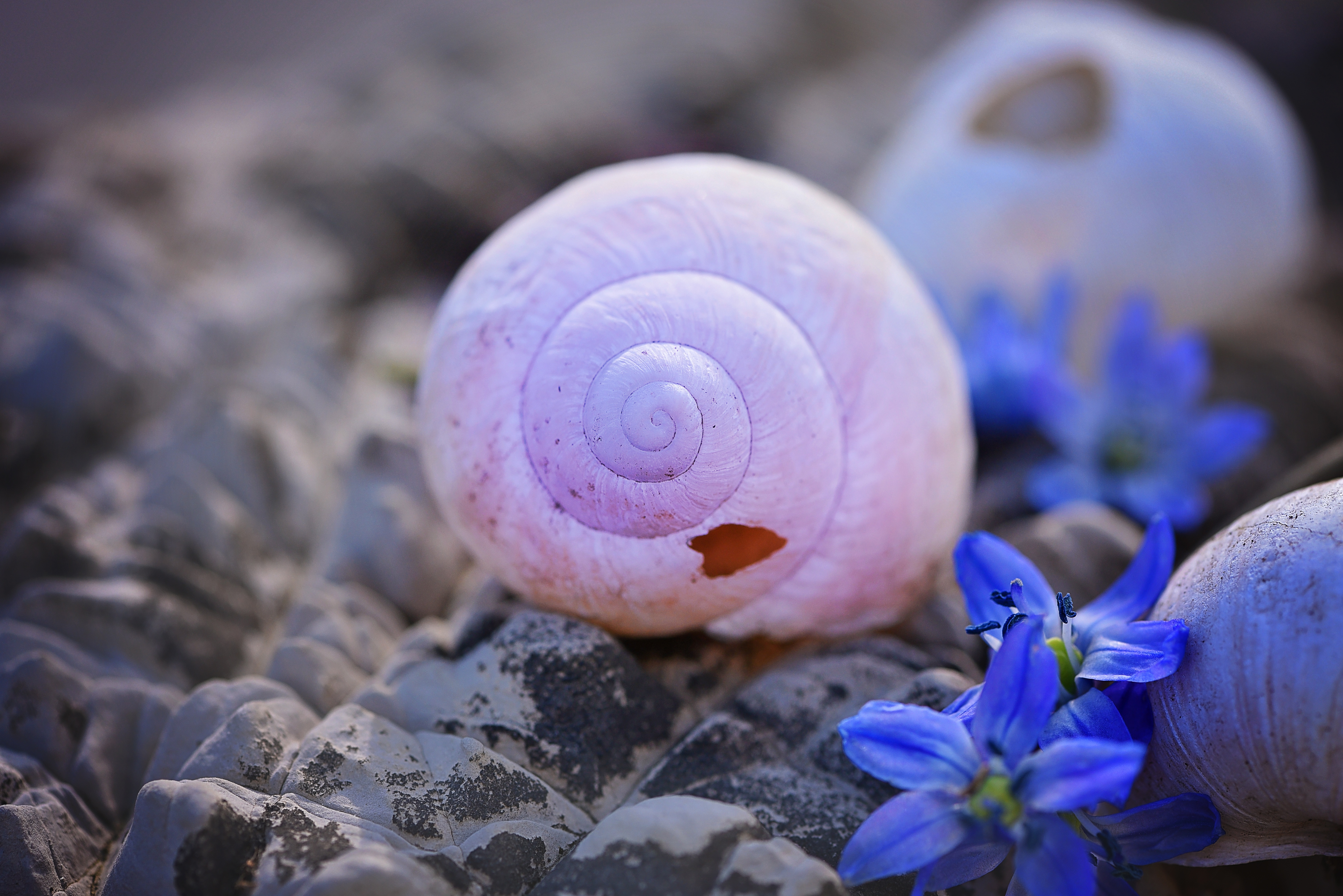 132020 download wallpaper Macro, Stones, Shells, Flower screensavers and pictures for free