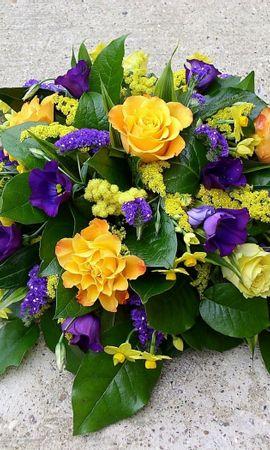 43329 télécharger le fond d'écran Plantes, Fleurs - économiseurs d'écran et images gratuitement