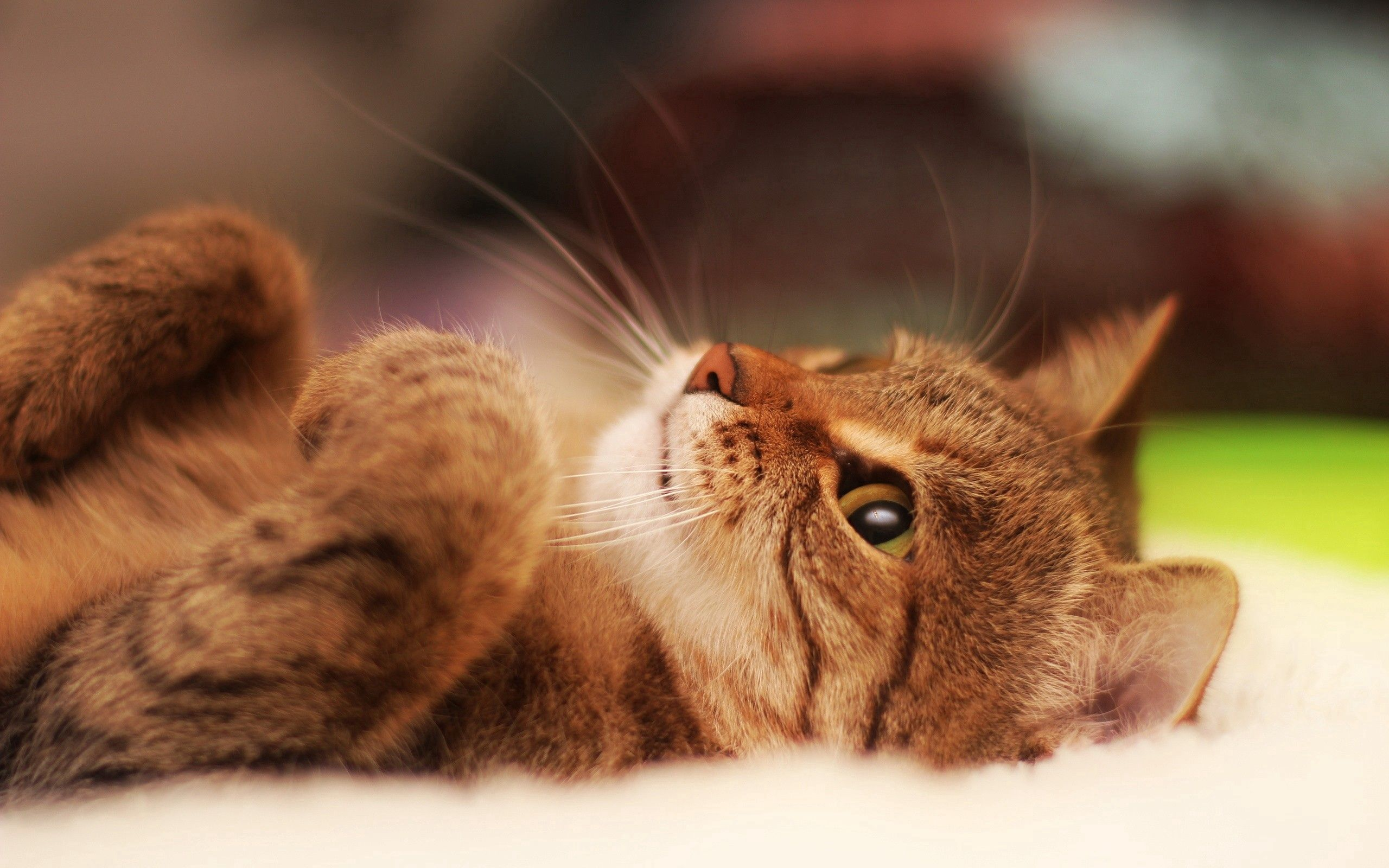 132812 download wallpaper Animals, Cat, Nice, Sweetheart, Striped, To Lie Down, Lie, Paws screensavers and pictures for free