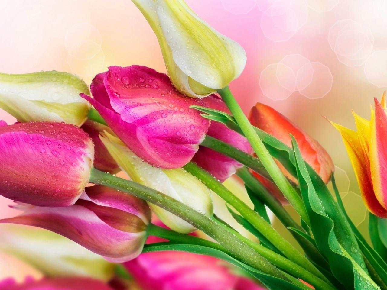 38650 скачать обои Растения, Цветы, Тюльпаны - заставки и картинки бесплатно