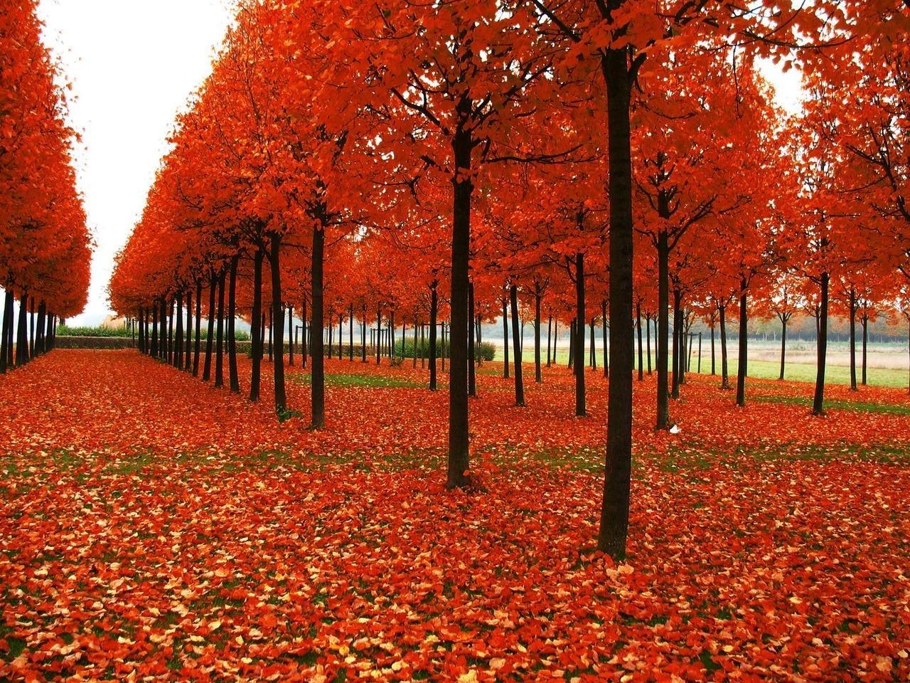 24554 скачать обои Пейзаж, Деревья, Осень, Листья - заставки и картинки бесплатно