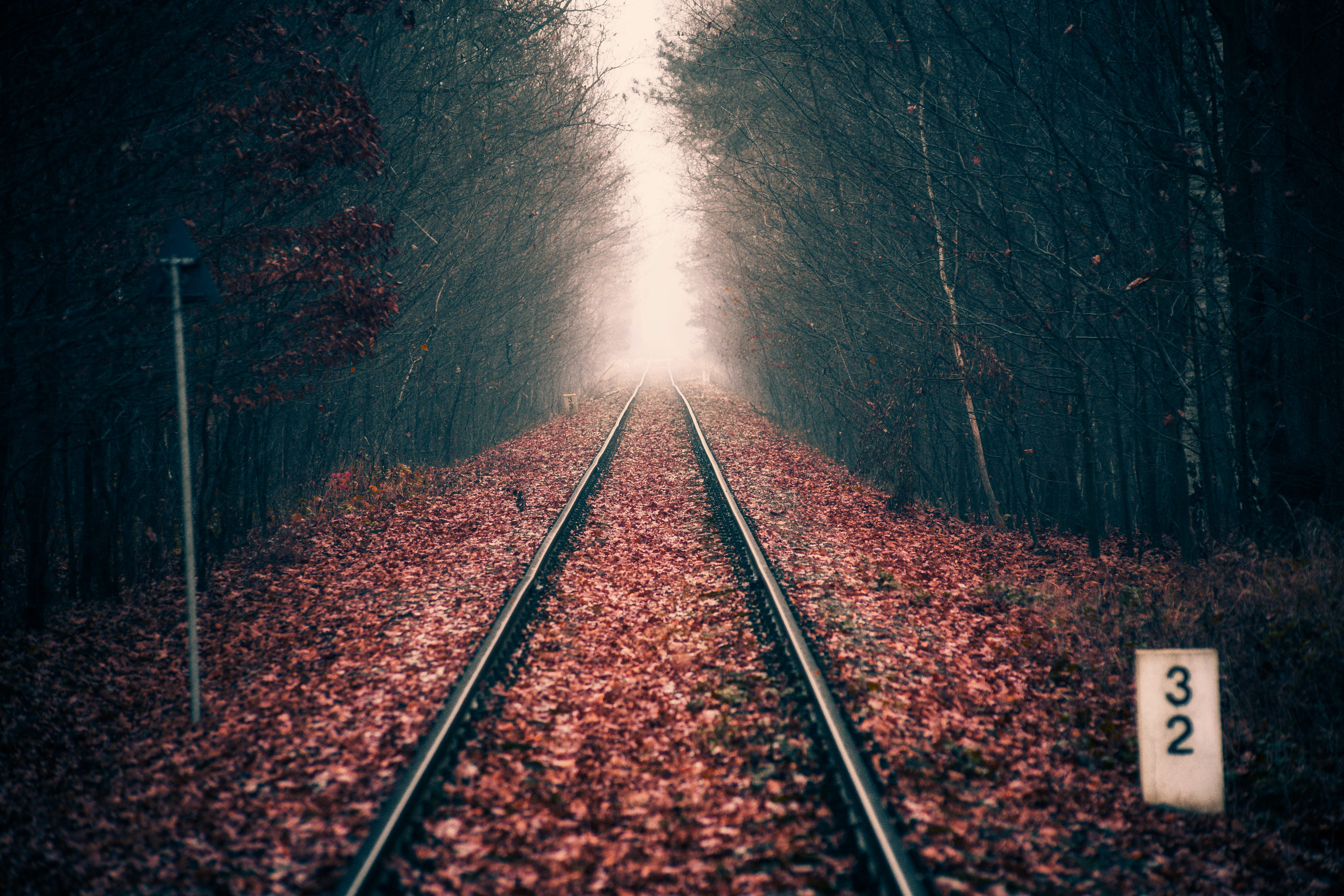 80724 Screensavers and Wallpapers Foliage for phone. Download Nature, Autumn, Forest, Foliage, Dahl, Distance, Railway, Rails pictures for free