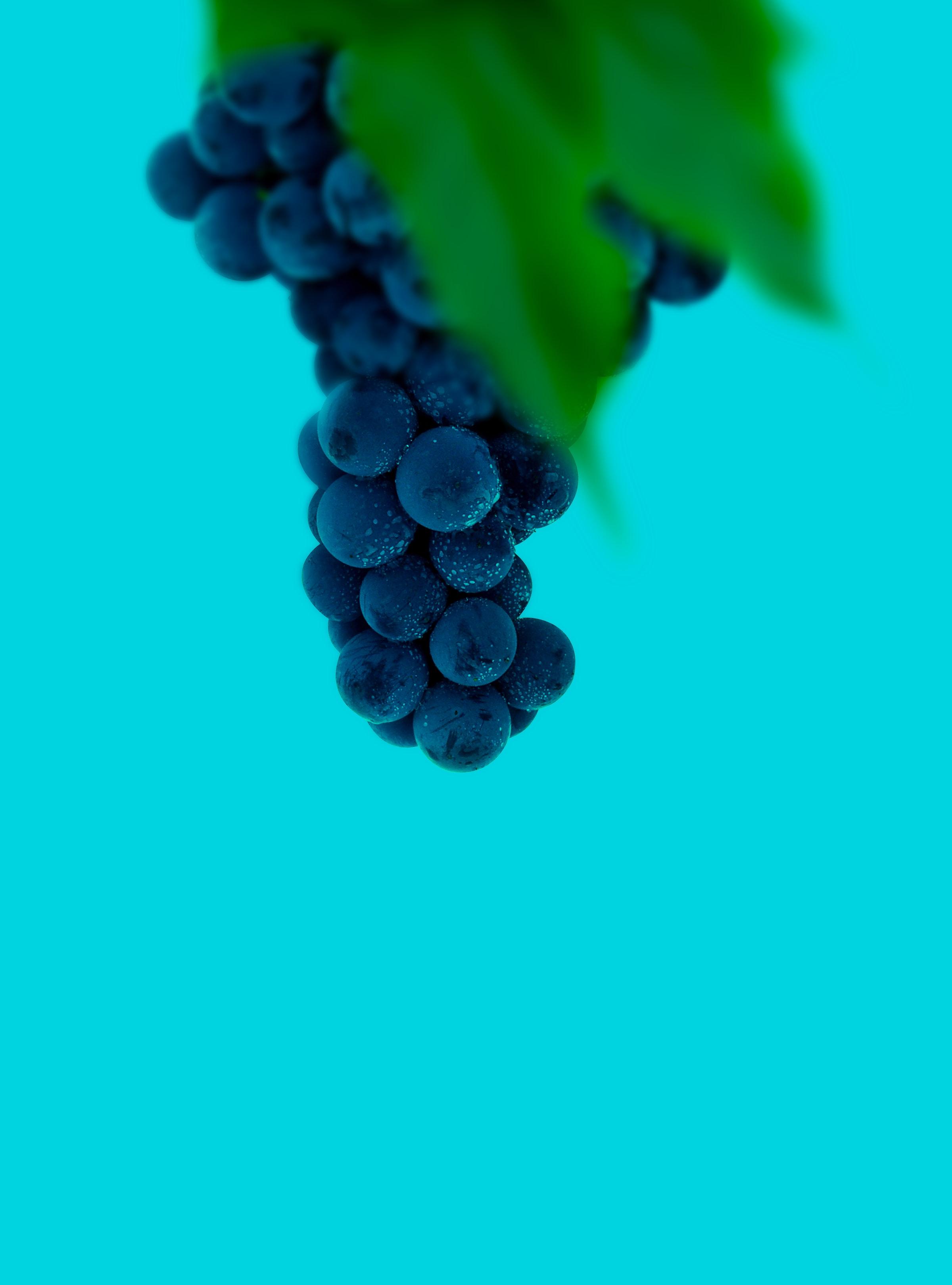 102999 скачать обои Виноград, Ягоды, Макро, Мокрый, Гроздь - заставки и картинки бесплатно