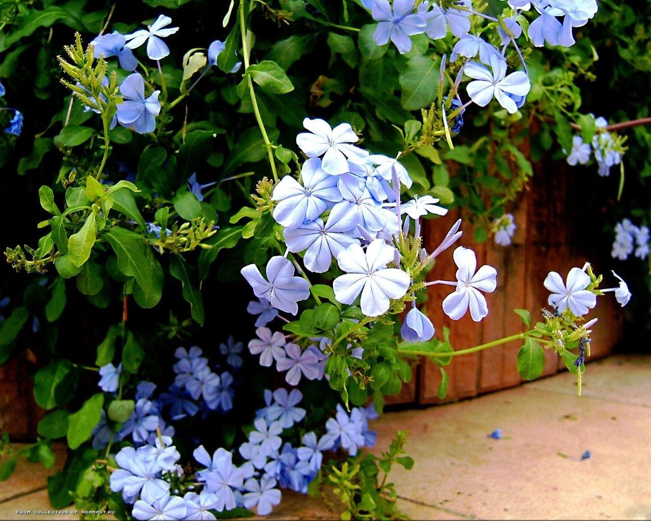 2427 скачать обои Растения, Цветы - заставки и картинки бесплатно