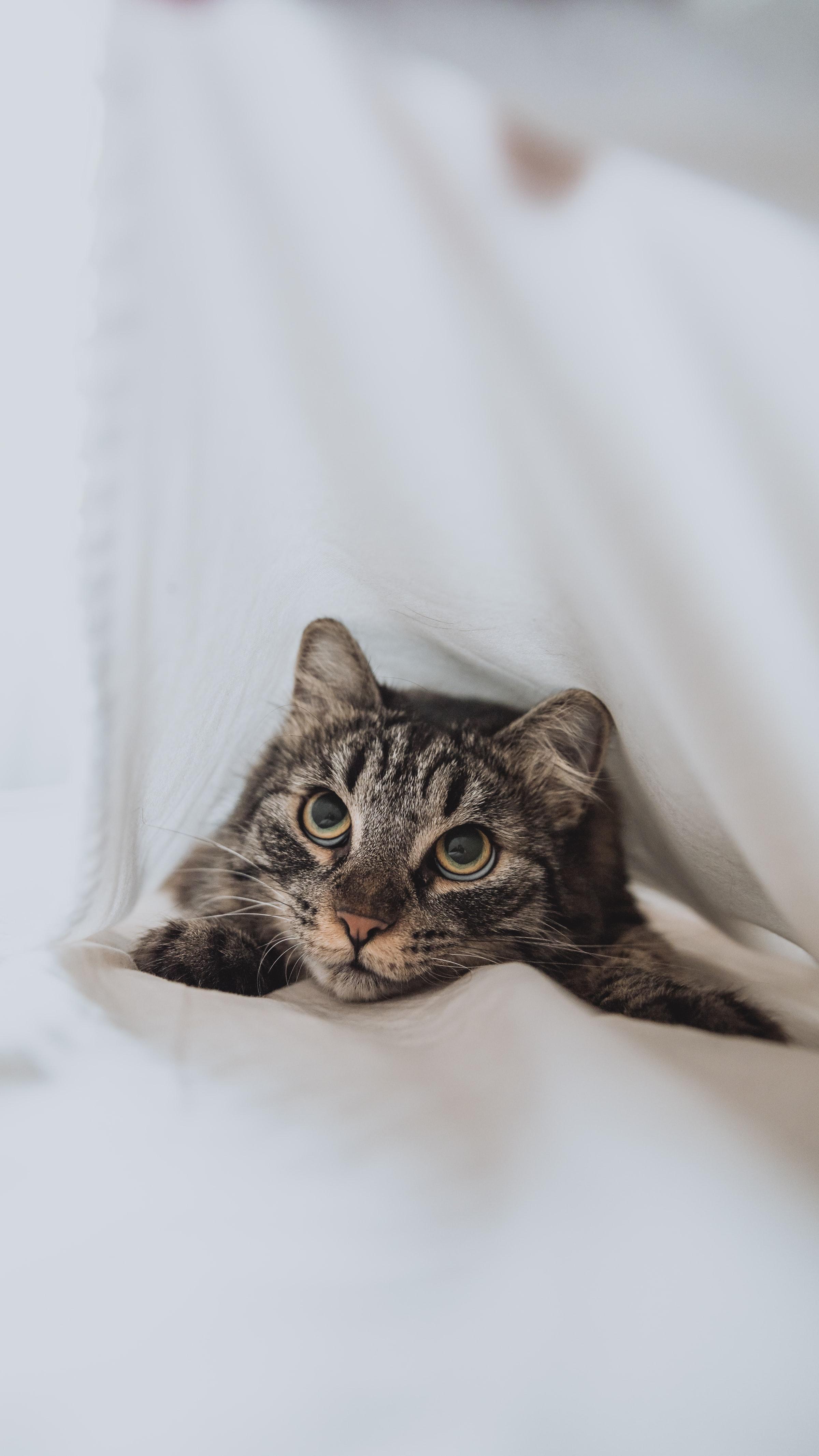 114203 скачать обои Животные, Кот, Глаза, Питомец, Белый, Взгляд - заставки и картинки бесплатно