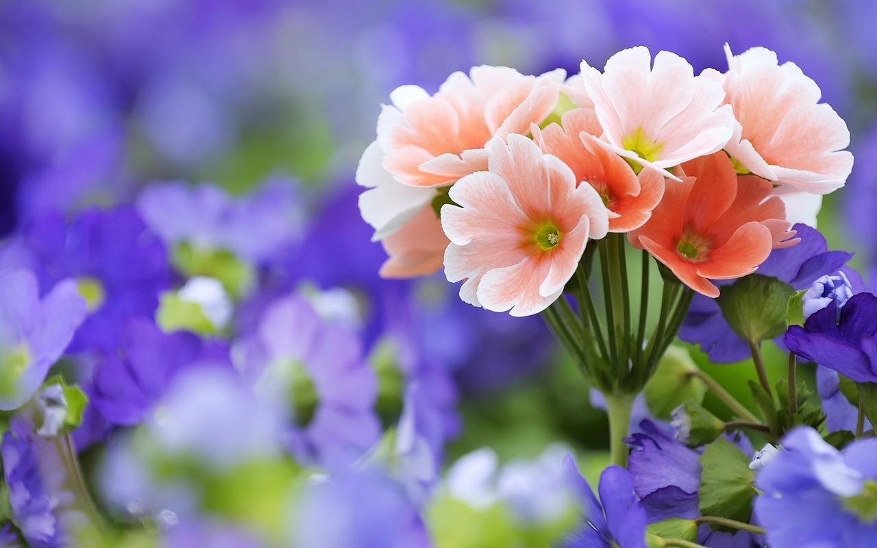 15350 descargar fondo de pantalla Plantas, Flores: protectores de pantalla e imágenes gratis