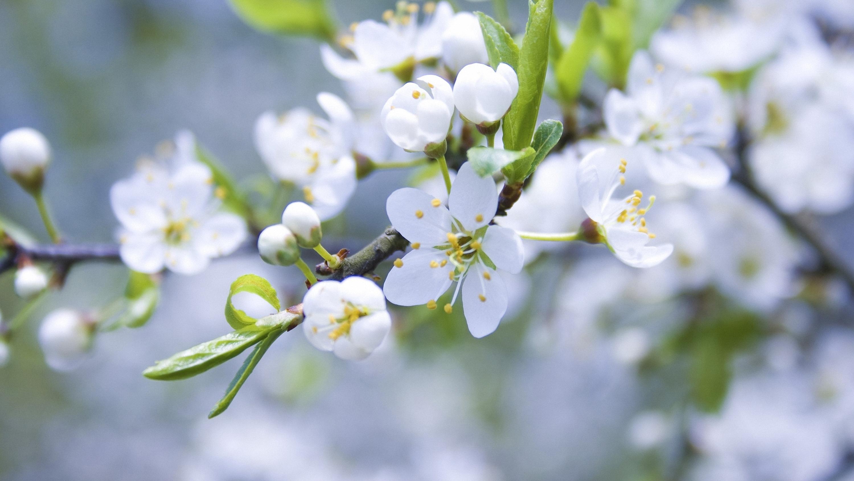 Скачать обои Весна на телефон бесплатно