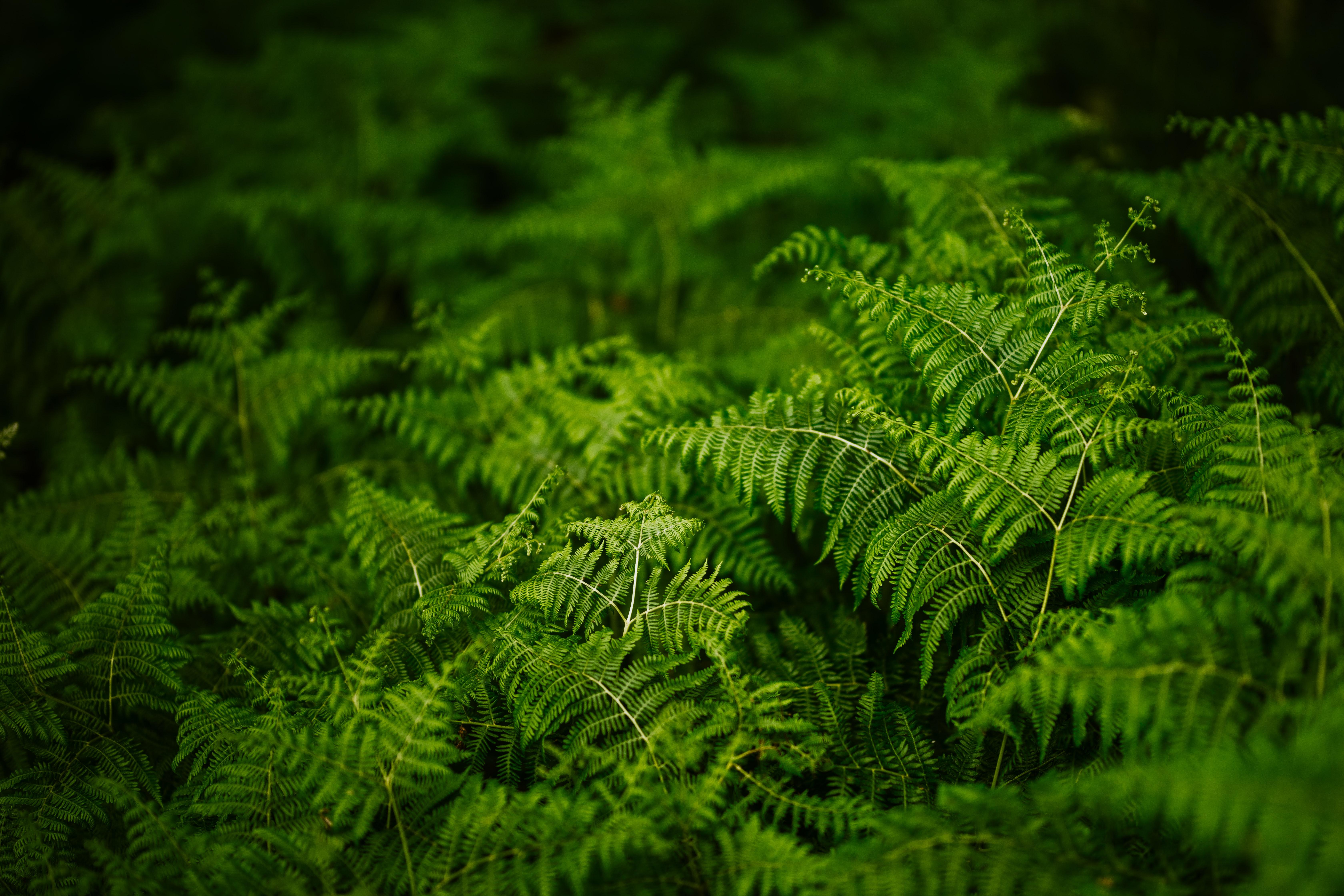 82176 скачать обои Растения, Природа, Папоротник, Зеленый - заставки и картинки бесплатно