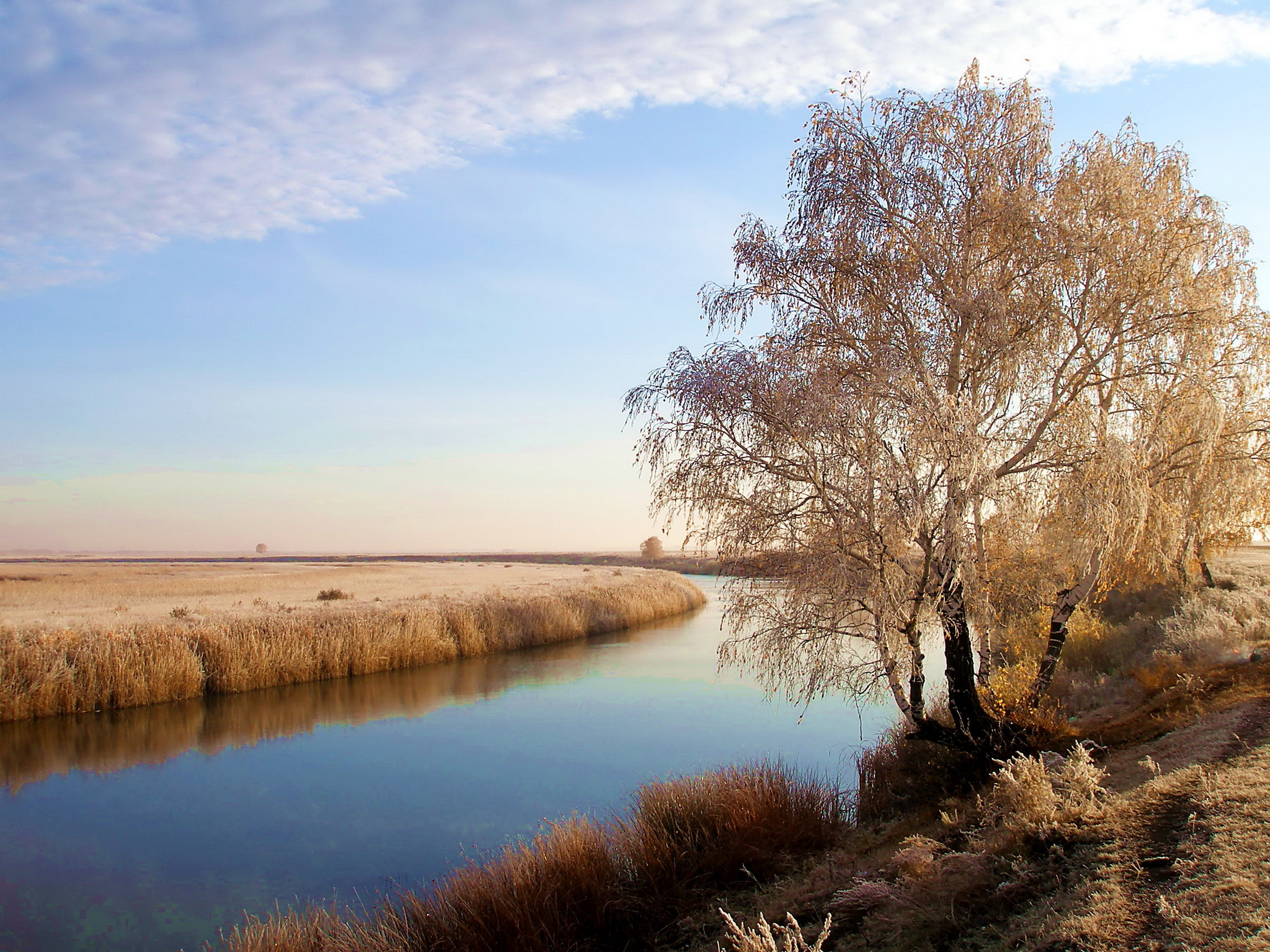 10942 download wallpaper Landscape, Rivers, Trees screensavers and pictures for free