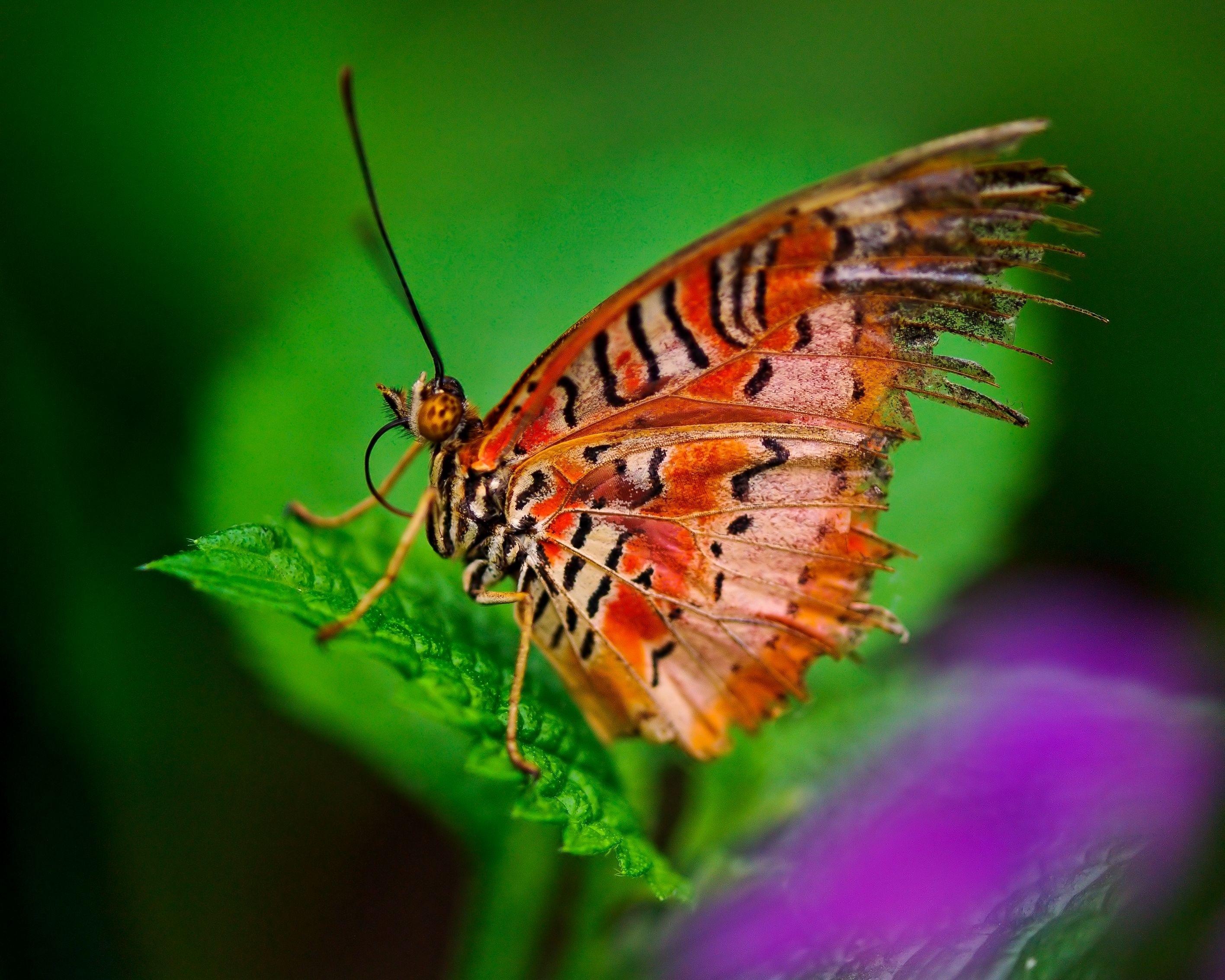 53769 скачать обои Макро, Бабочка, Растение, Листья, Узоры - заставки и картинки бесплатно