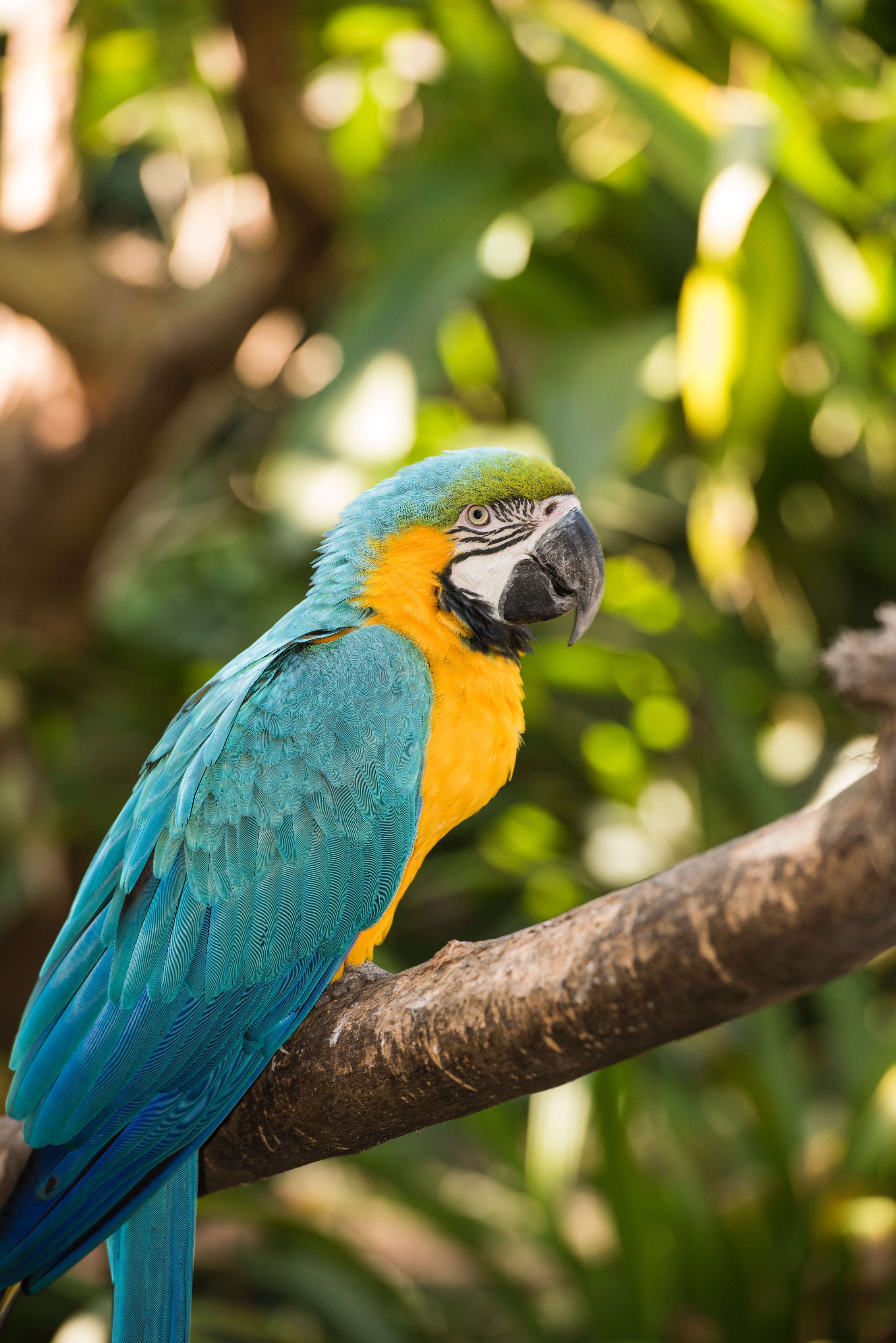 152334 download wallpaper Animals, Macaw, Parrots, Bird, Multicolored, Motley, Tropical screensavers and pictures for free