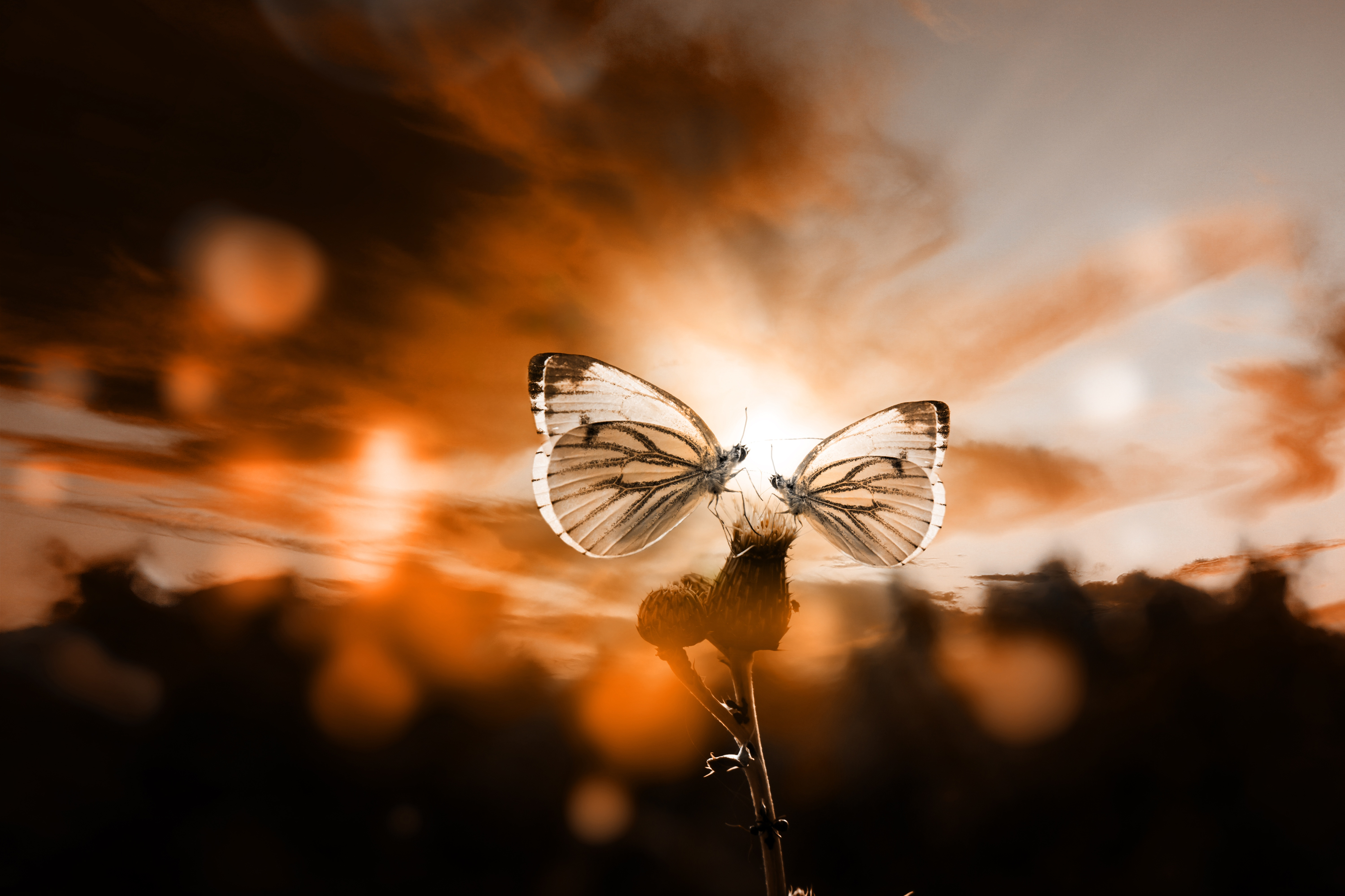 154979 Screensavers and Wallpapers Butterflies for phone. Download Macro, Butterflies, Sky, Plant, Dusk, Twilight, Backlight, Illumination, Romantically, Romantic pictures for free