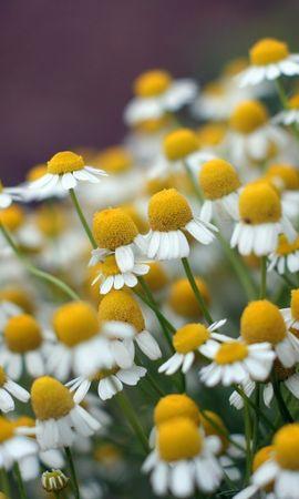 41112 télécharger le fond d'écran Plantes, Fleurs - économiseurs d'écran et images gratuitement