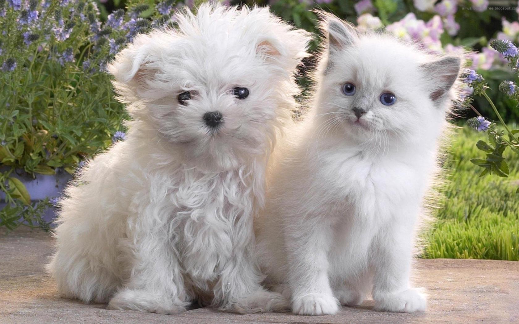 23304 скачать обои Животные, Кошки (Коты, Котики), Собаки - заставки и картинки бесплатно